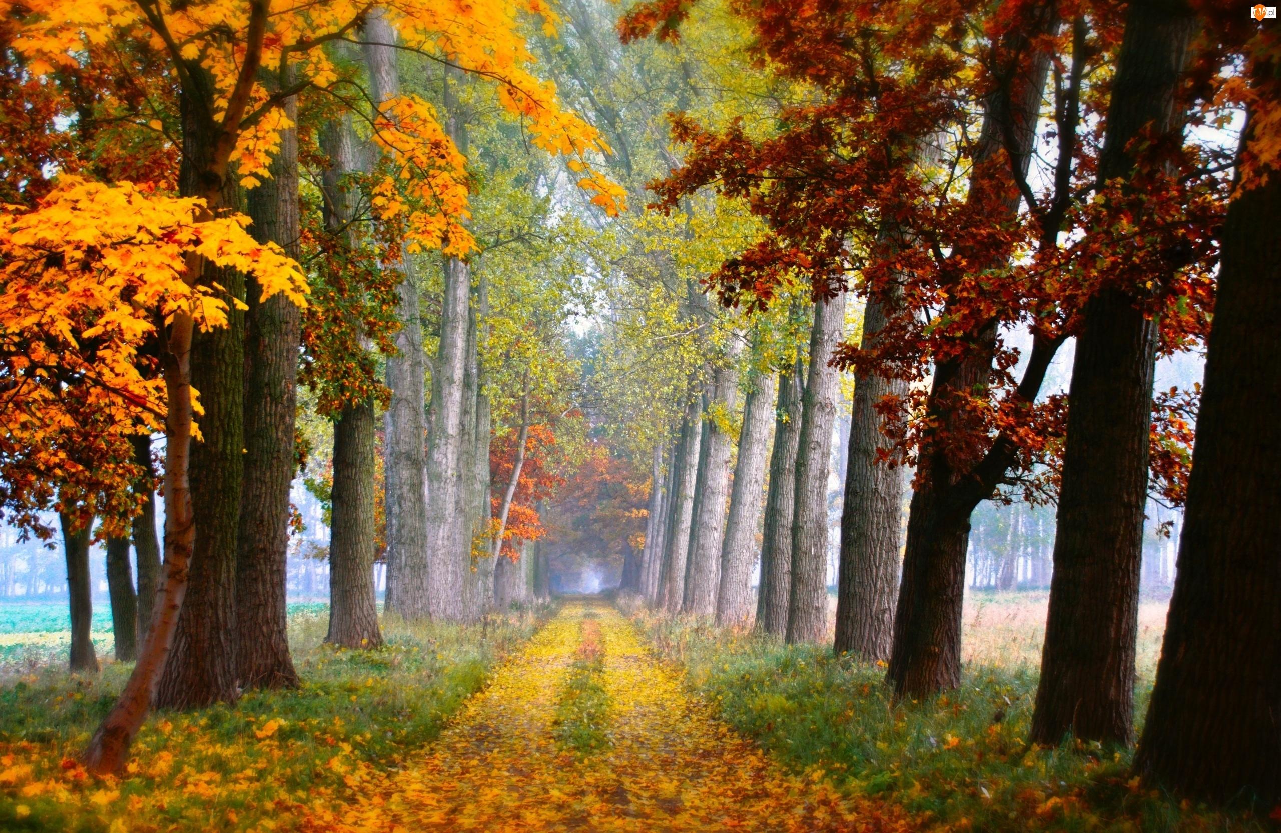Liście, Jesień , Drzewa