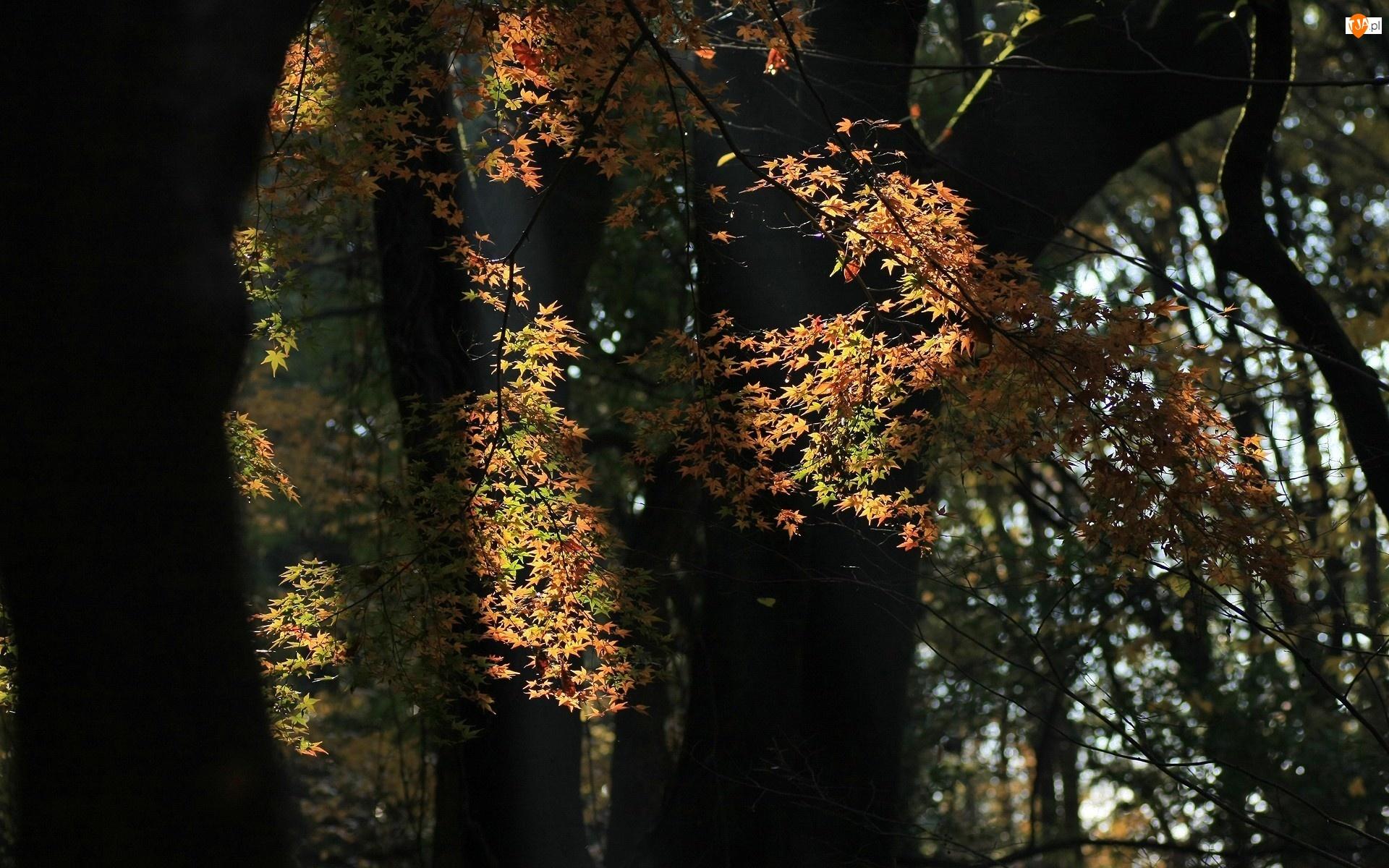 Światło, Liście, Drzewa