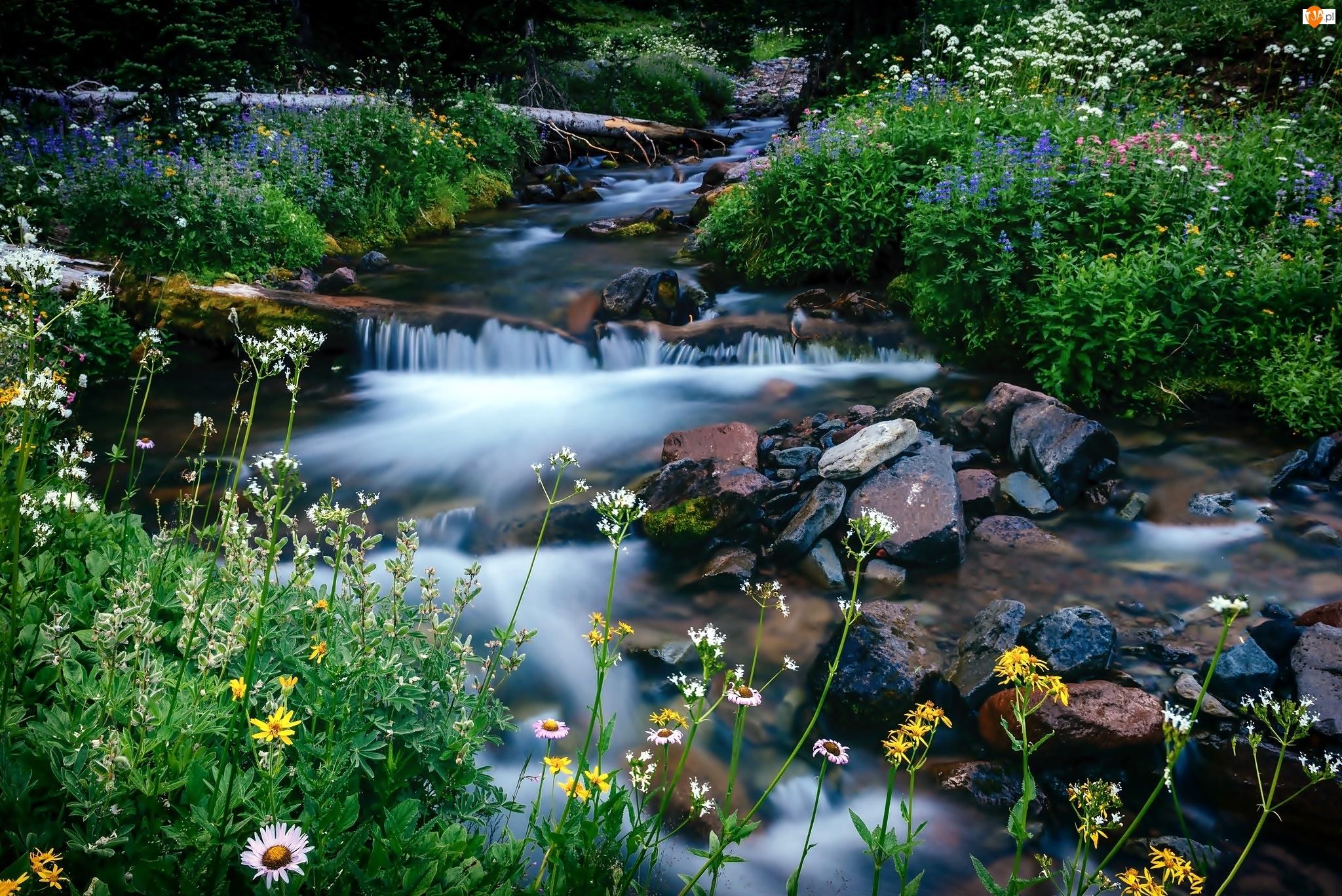 Kamienie, Potok, Kwiaty