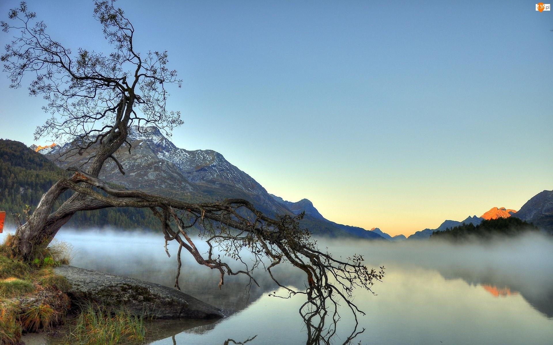 Góry, Drzewo, Jezioro, Mgła