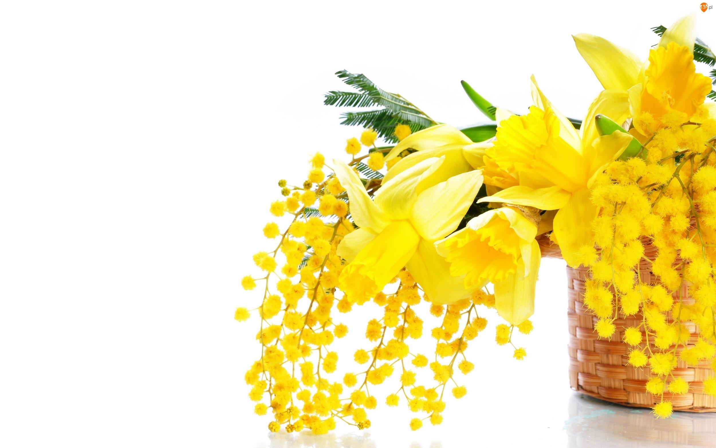Żonkile, Kwiaty, Koszyk