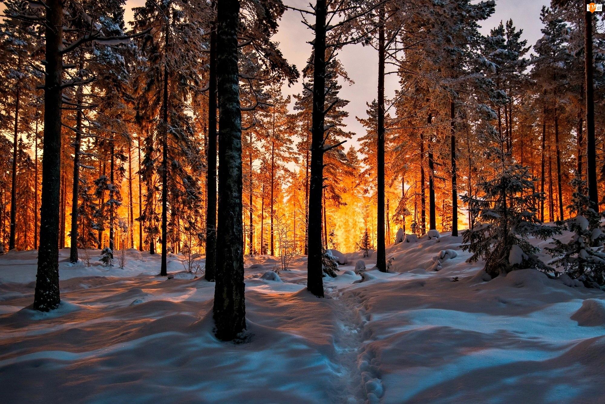Drzewa, Światło, Las, Zima, Ścieżka, Przebijające