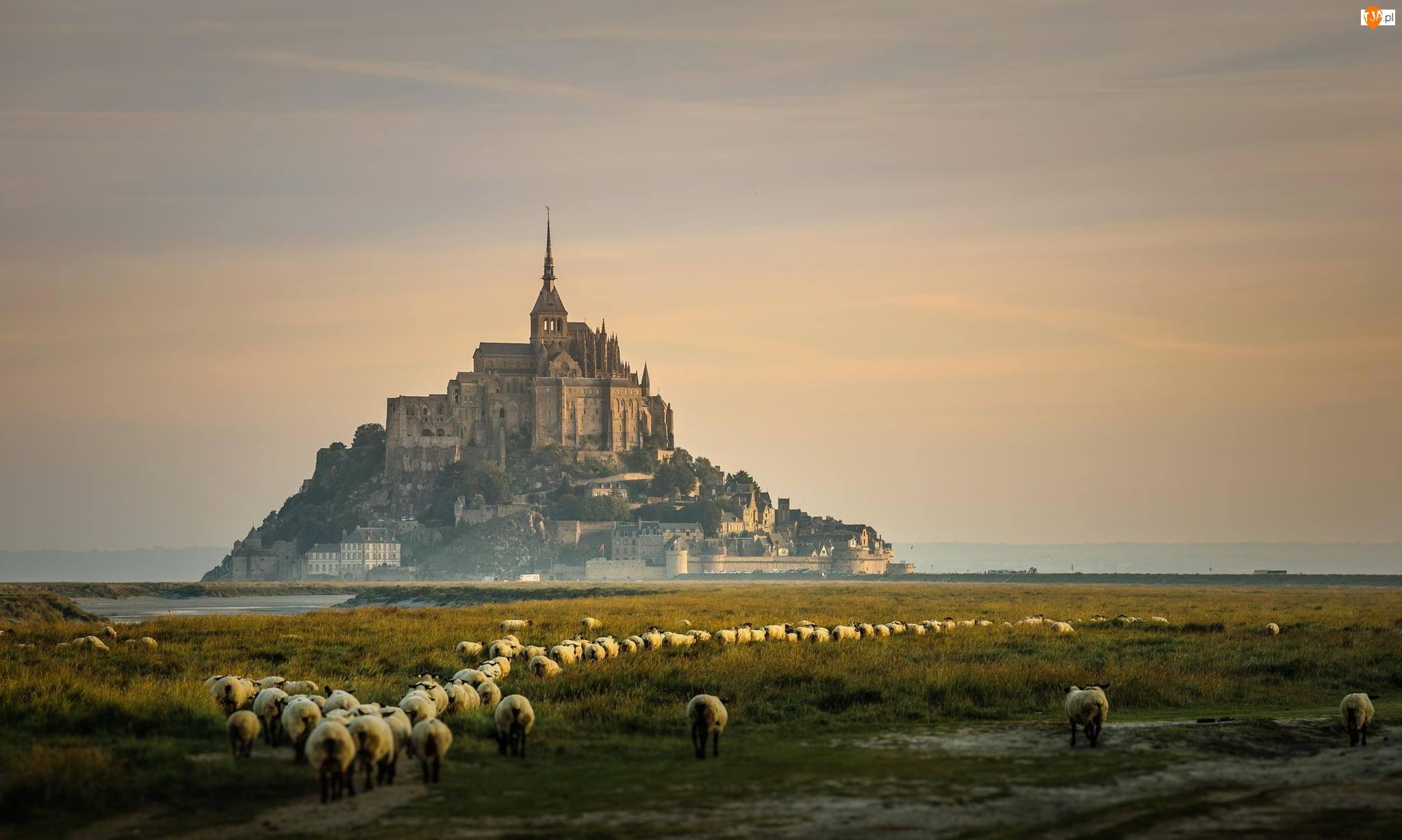 Wzgórze, Archanioła, Sanktuarium, Normandia, Owce, Michała, Wyspa