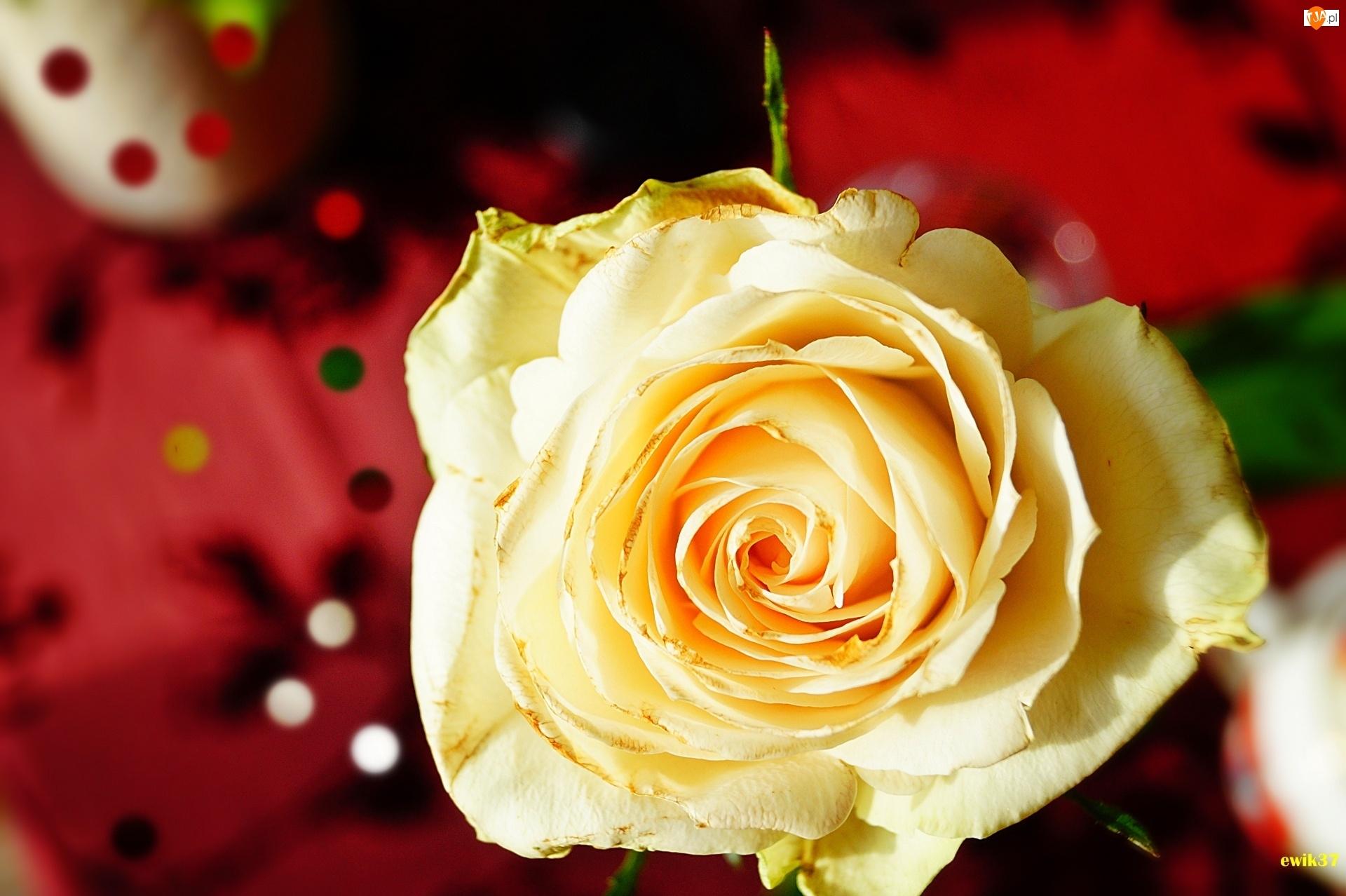 Róża, Efekty Graficzne