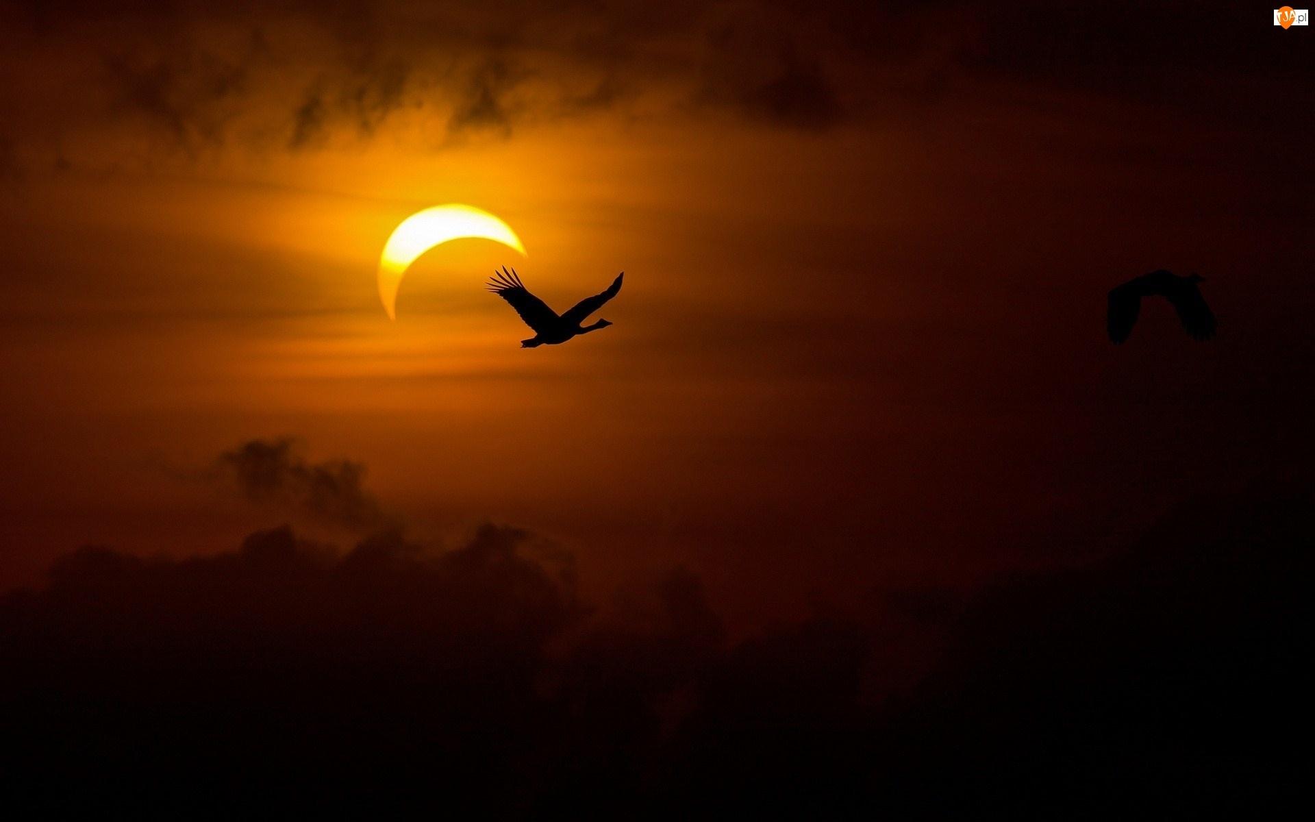 Żuraw, Ptak, Zachód słońca