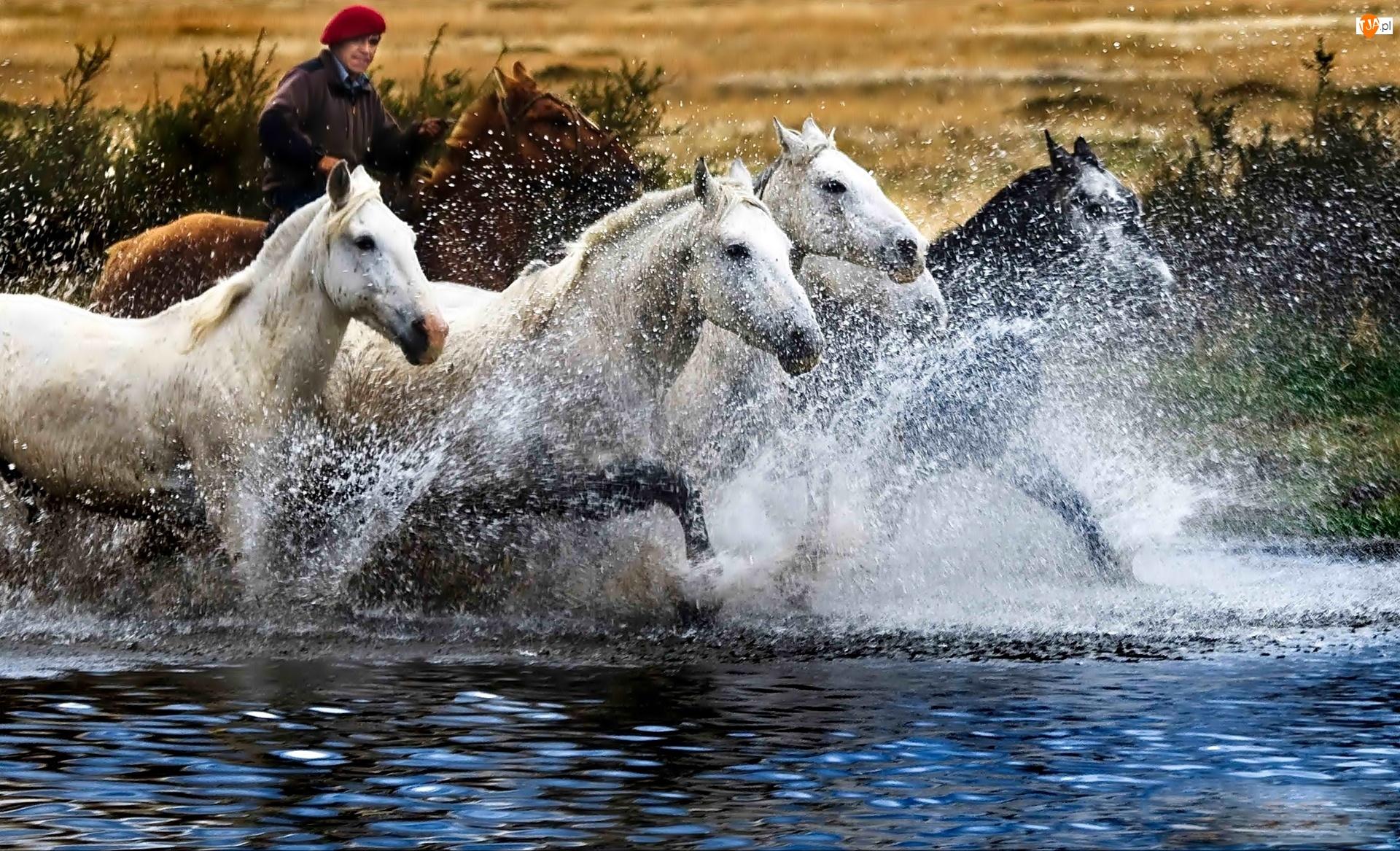 Konie, Woda, Rzeka, Rozbryzgująca