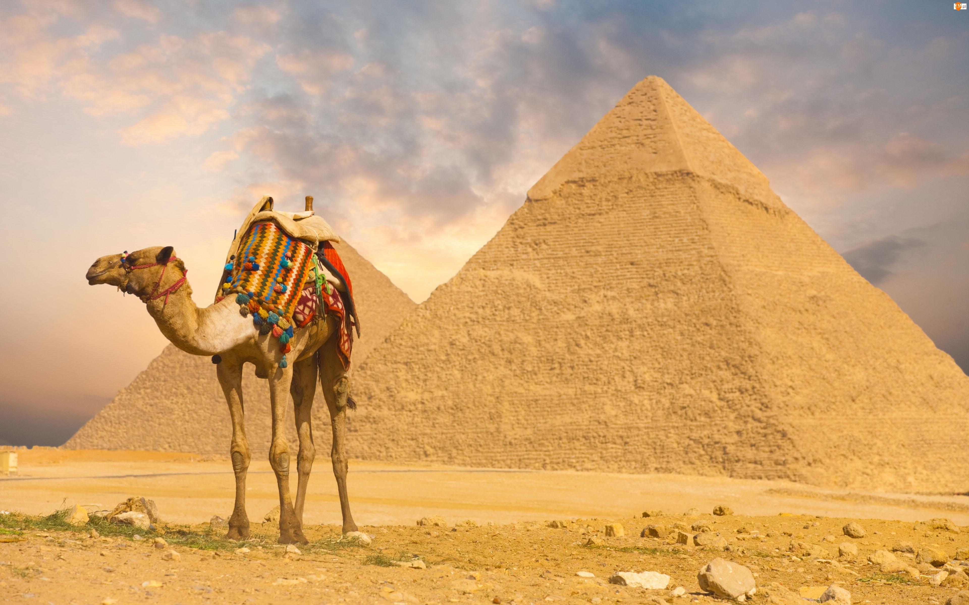 Siodło, Wielbłąd, Piramidy