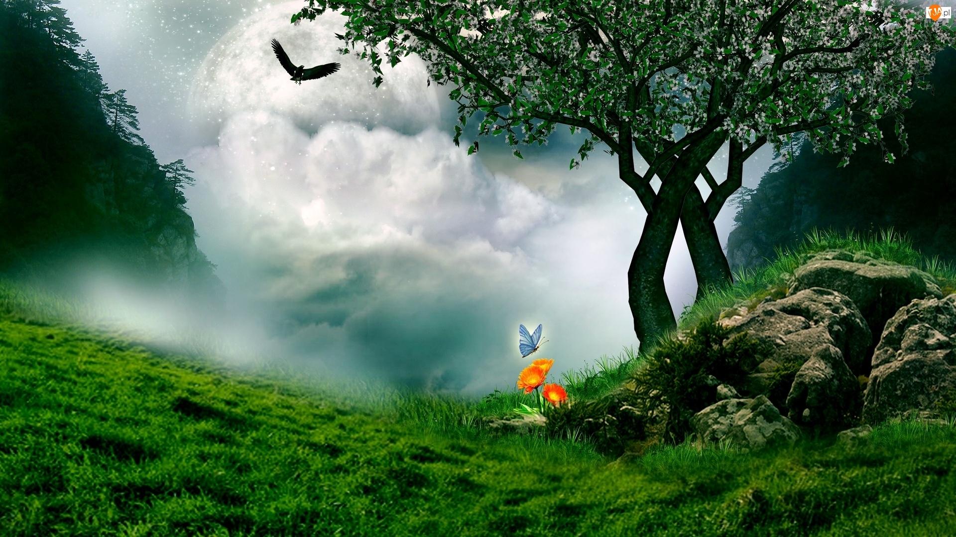 Ptak, Łąka, Motylek, Chmury, Kwiatek, Drzewo
