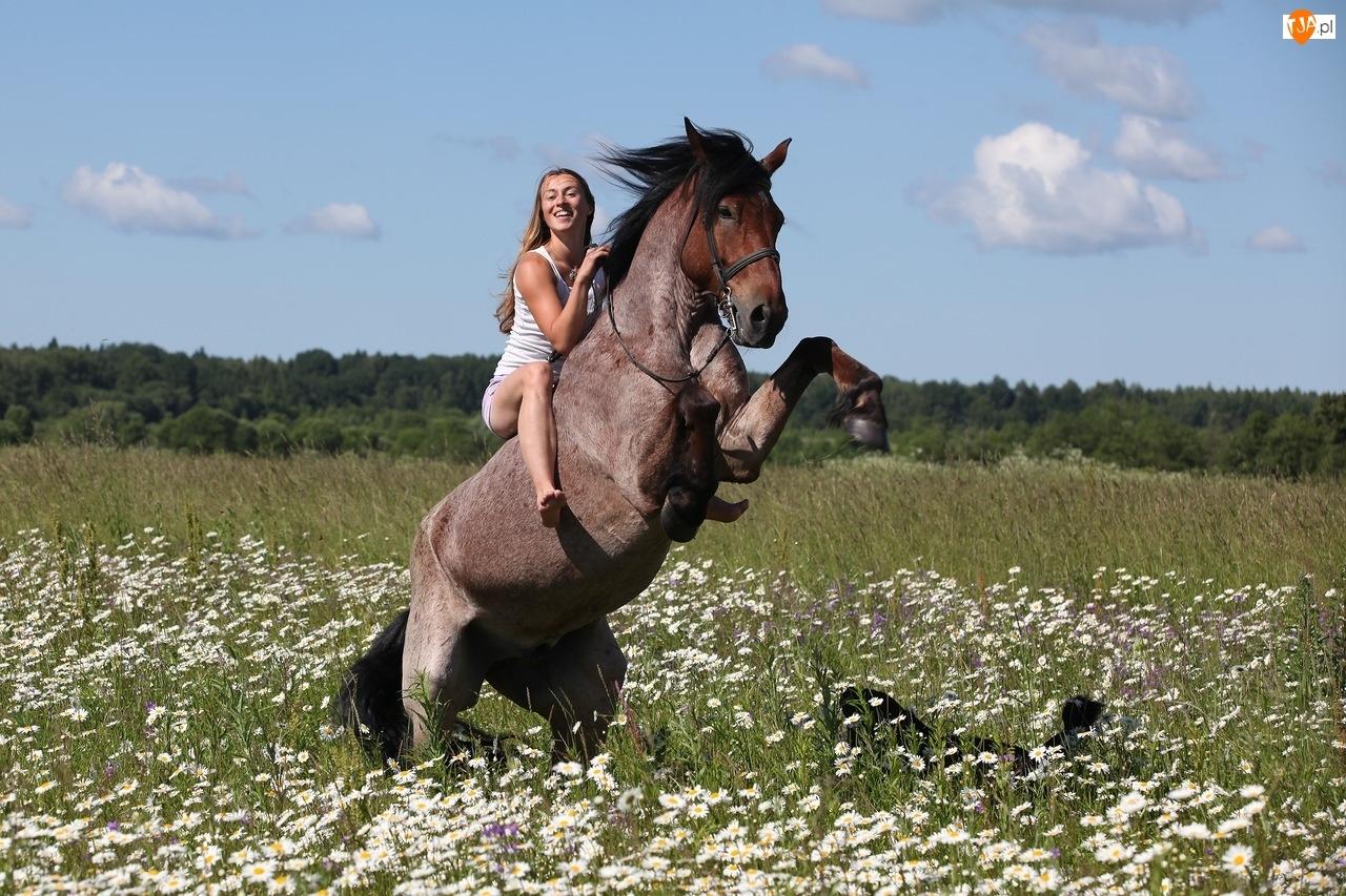 Kobieta, Rumianki, Koń, Łąka