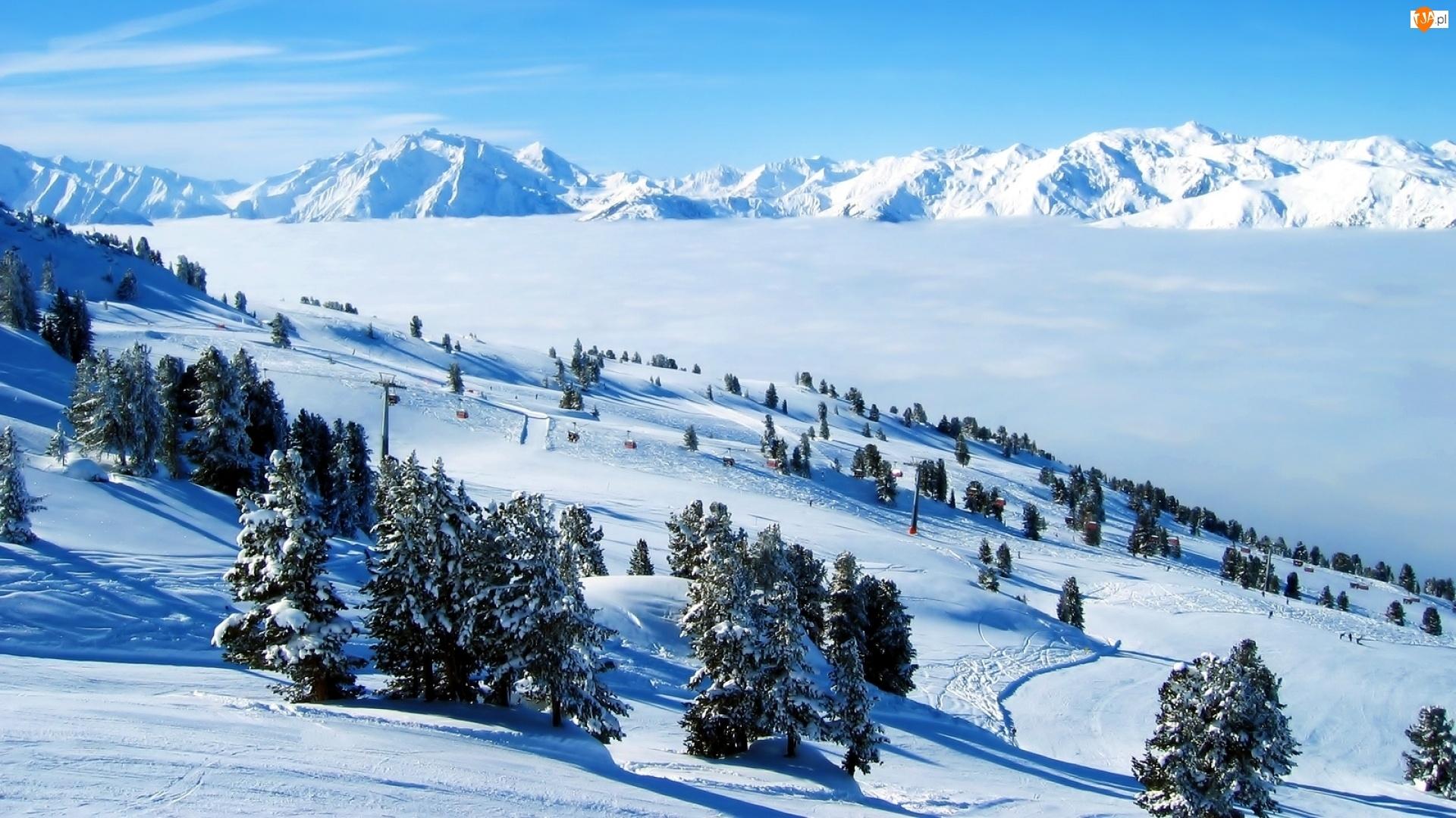Drzewa, Śnieg, Góry