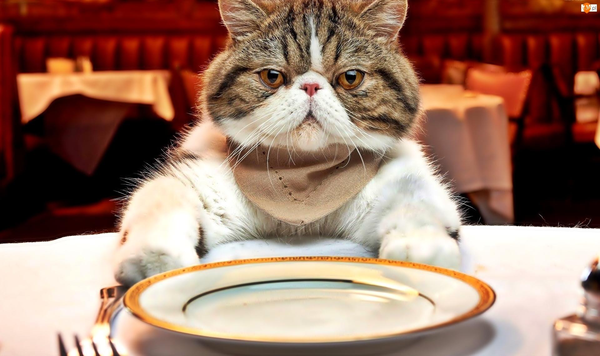 Stół, Kot, Talerz
