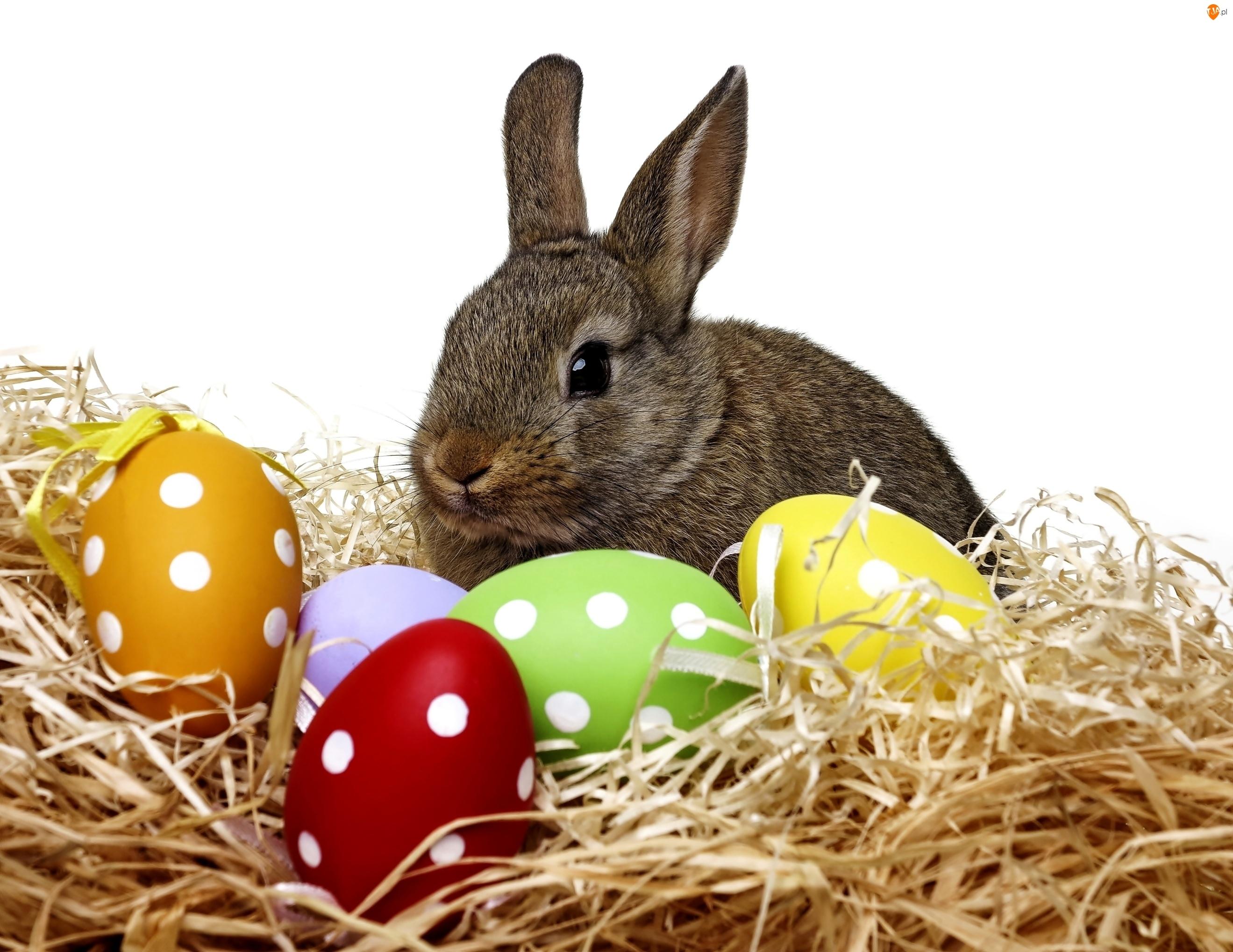 Zajączek, Wielkanoc, Jajka, Sianko