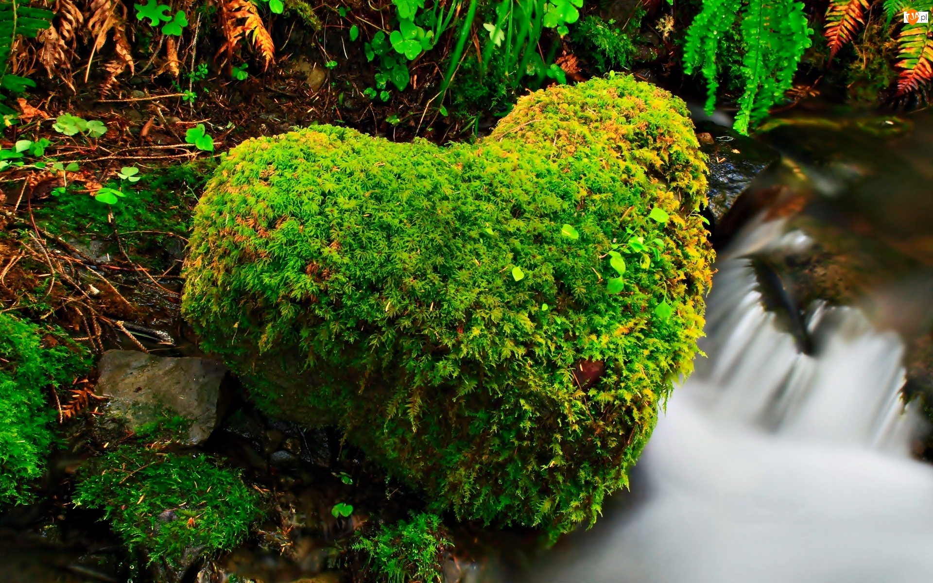Wodospad, Mech, Kamień, Serce