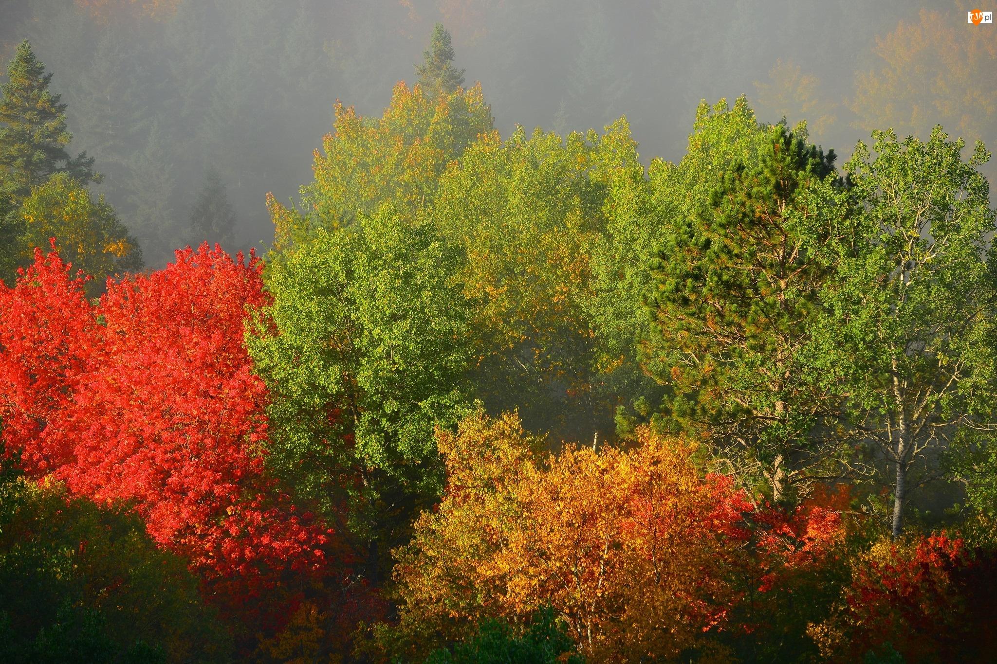 Drzewa, Liści, Kolorowe, Barwy
