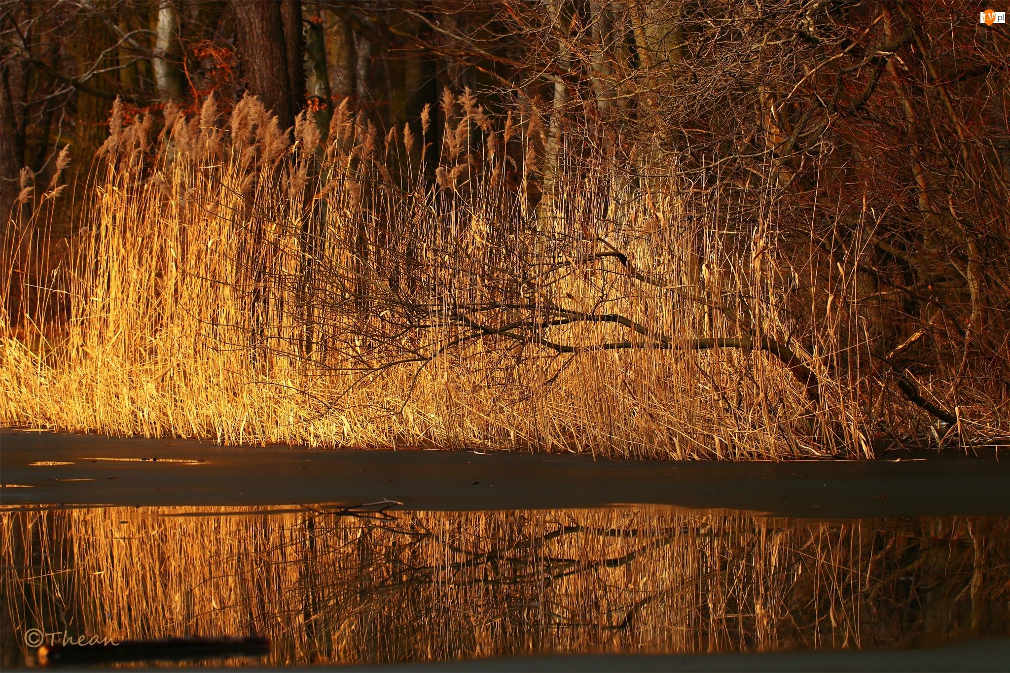 Przedwiośnie, Jezioro, Trawy, Topniejące, Drzewa