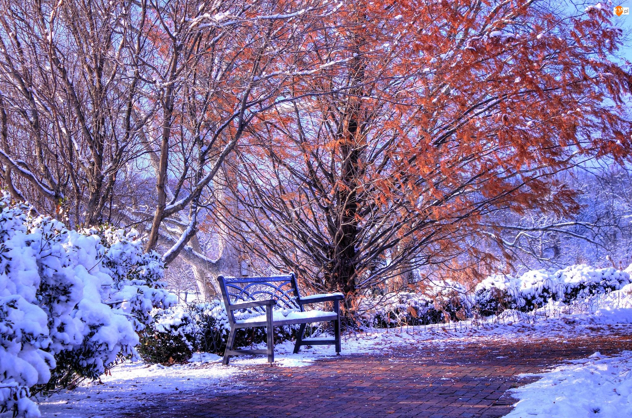 Śnieg, Zima, Drzewa, Park, Ławka