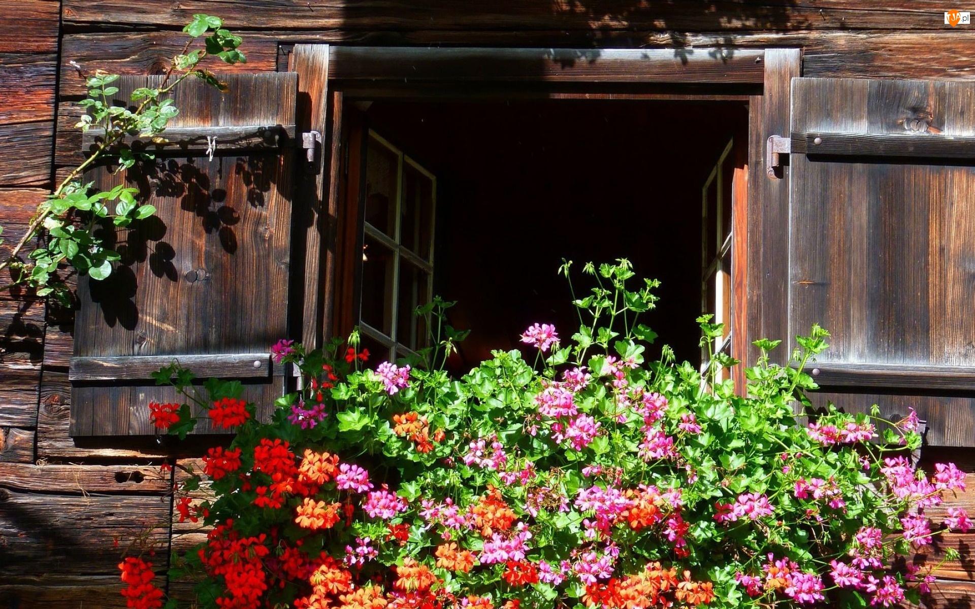 Drewniany, Pelargonie, Dom, Okno