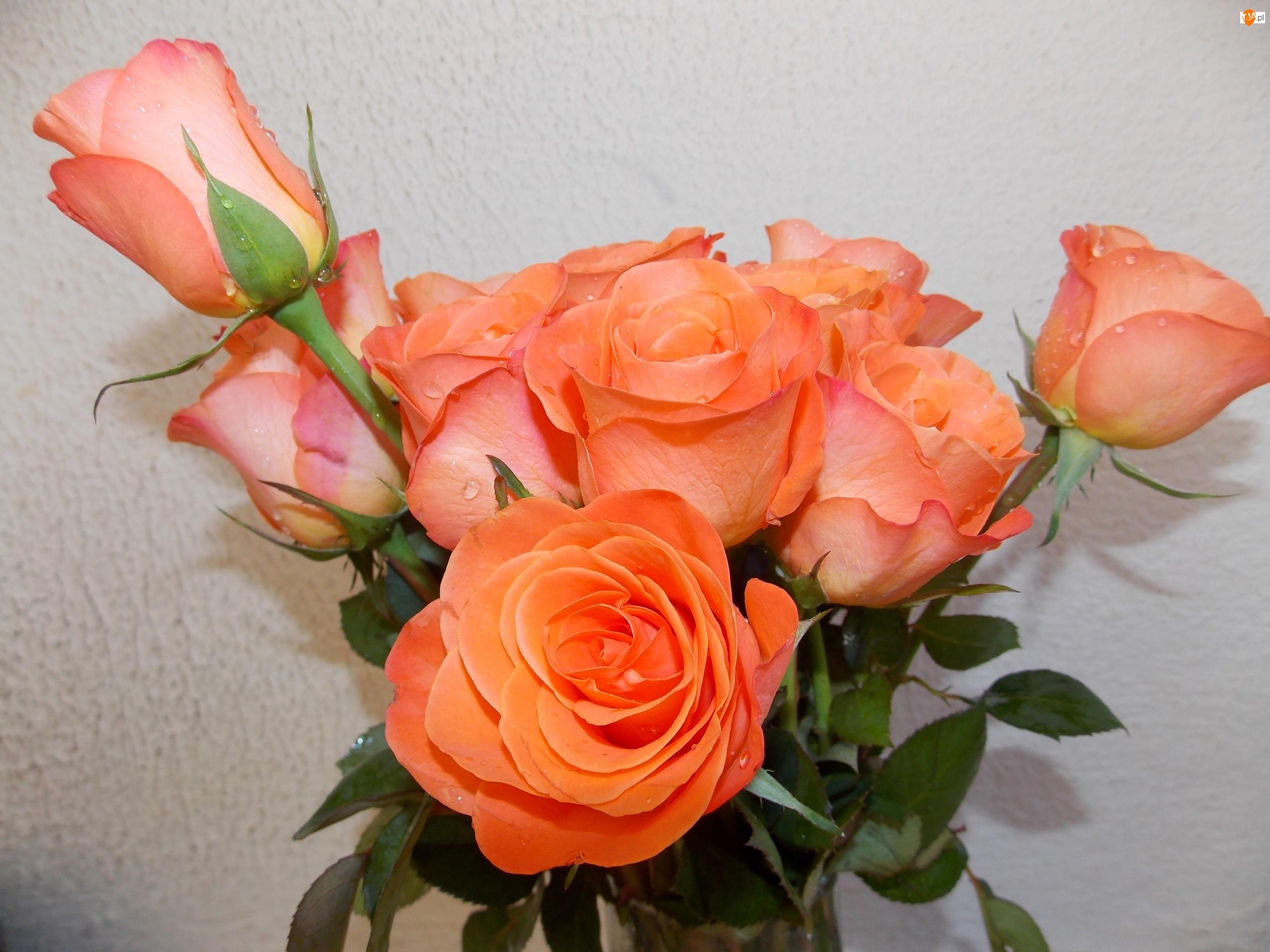 Bukiet, Róże, Pomarańczowe
