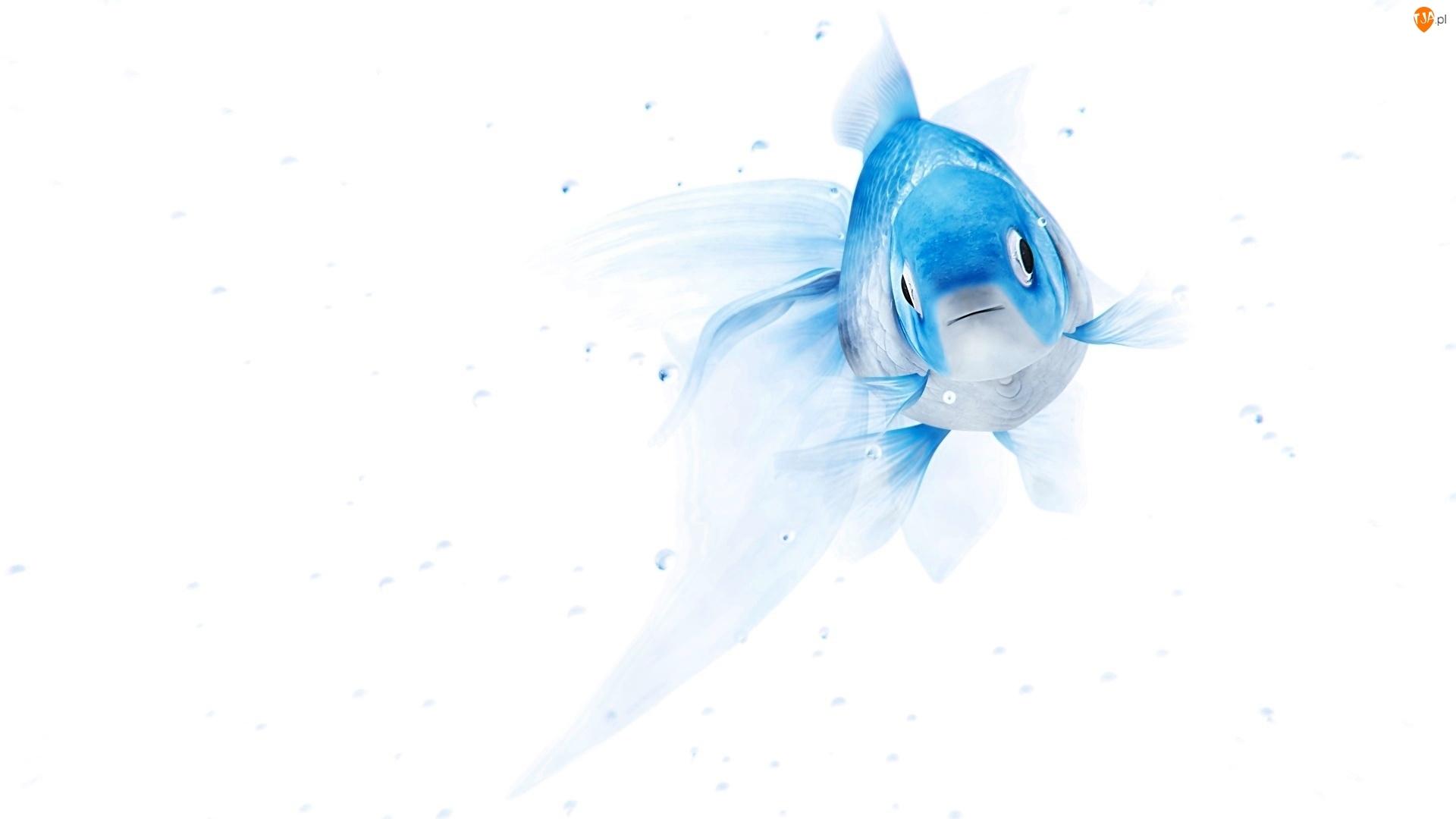 Grafika, Rybka, Niebieska, Ryba