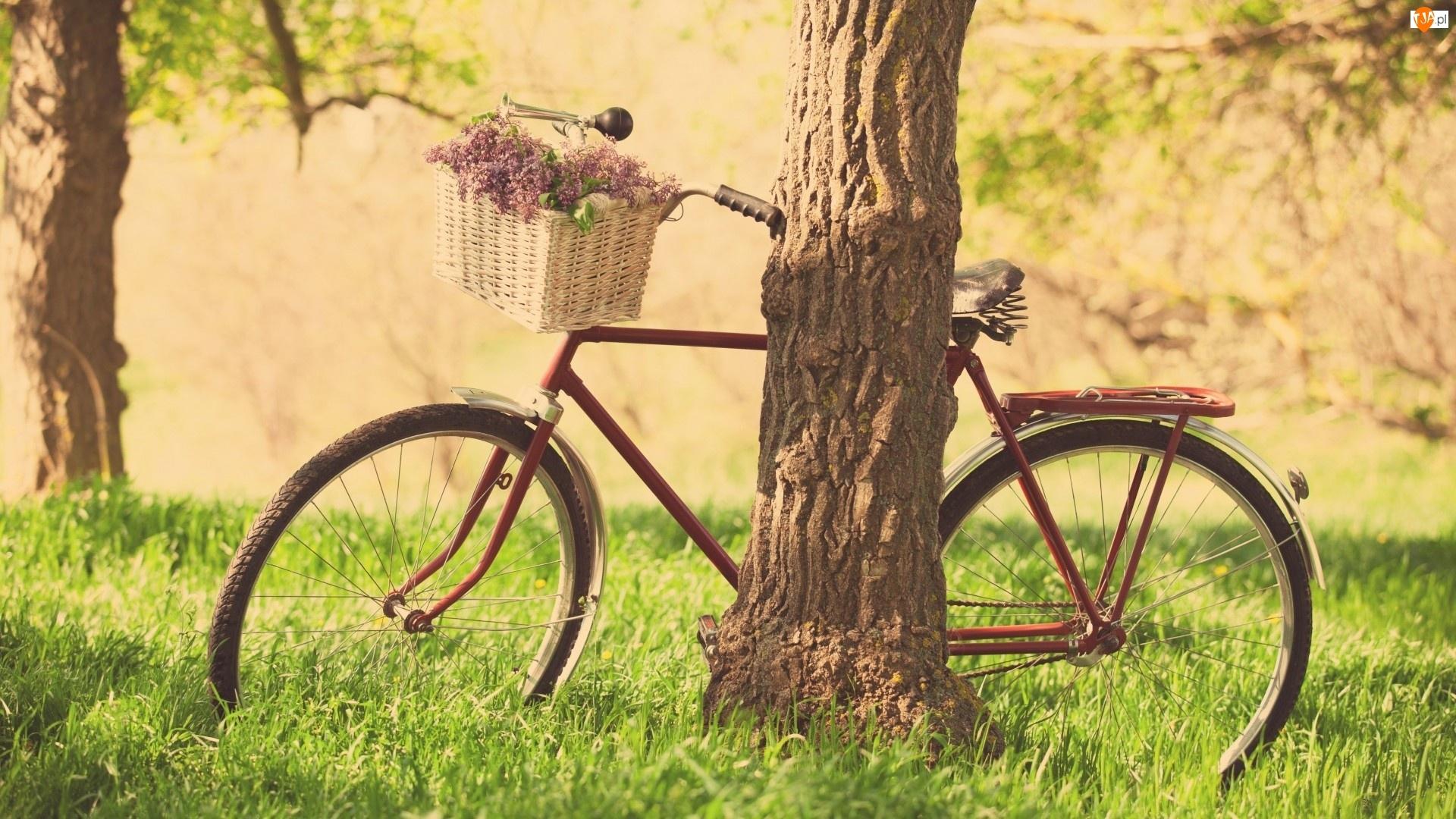 Kwiaty, Rower, Trawa, Drzewo, Kosz