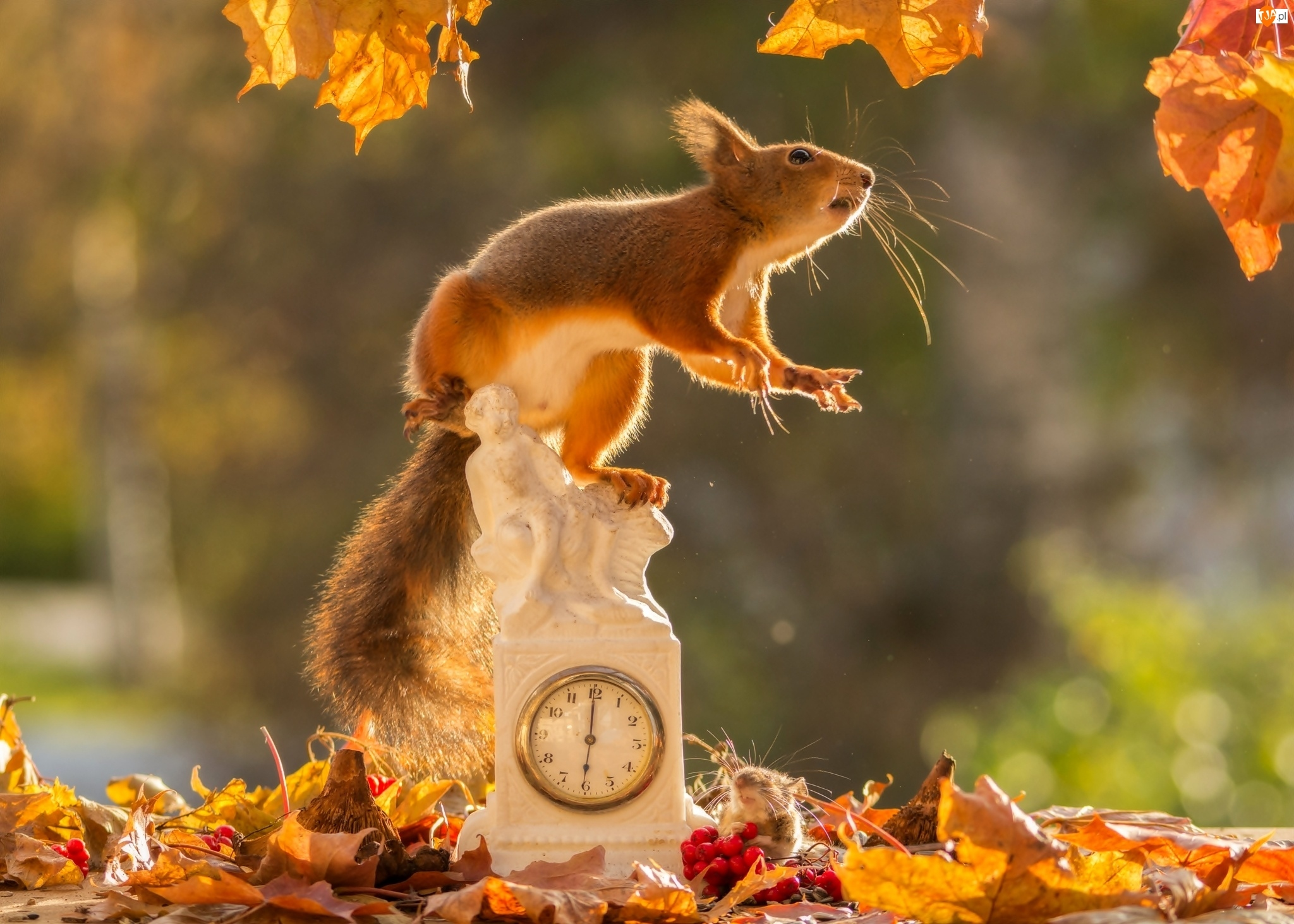 Zegar, Jarzebina, Jesień, Myszka, Wiewiórka, Liście