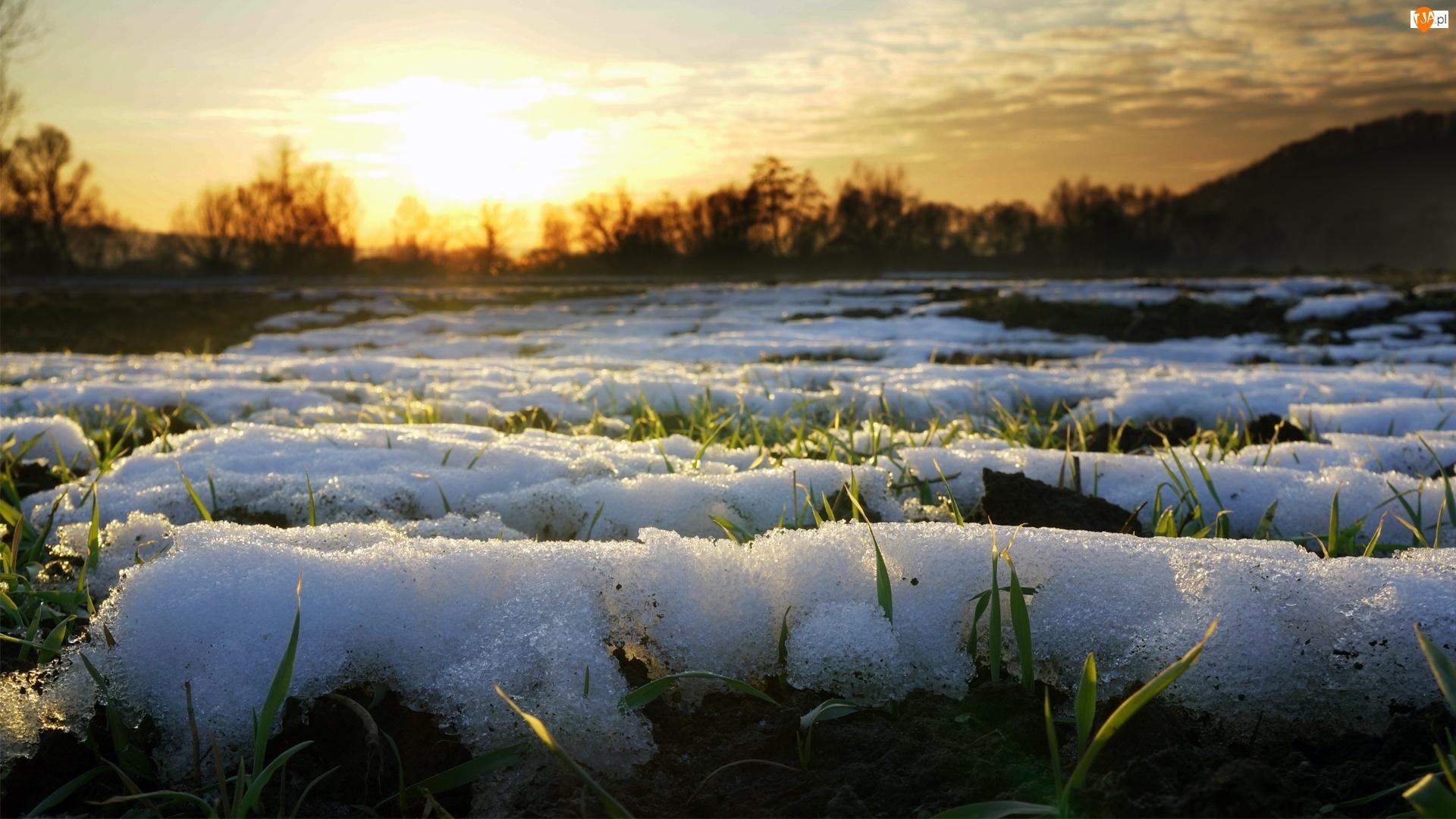 Śnieg, Zachód, Trawa, Słońca, Topniejący