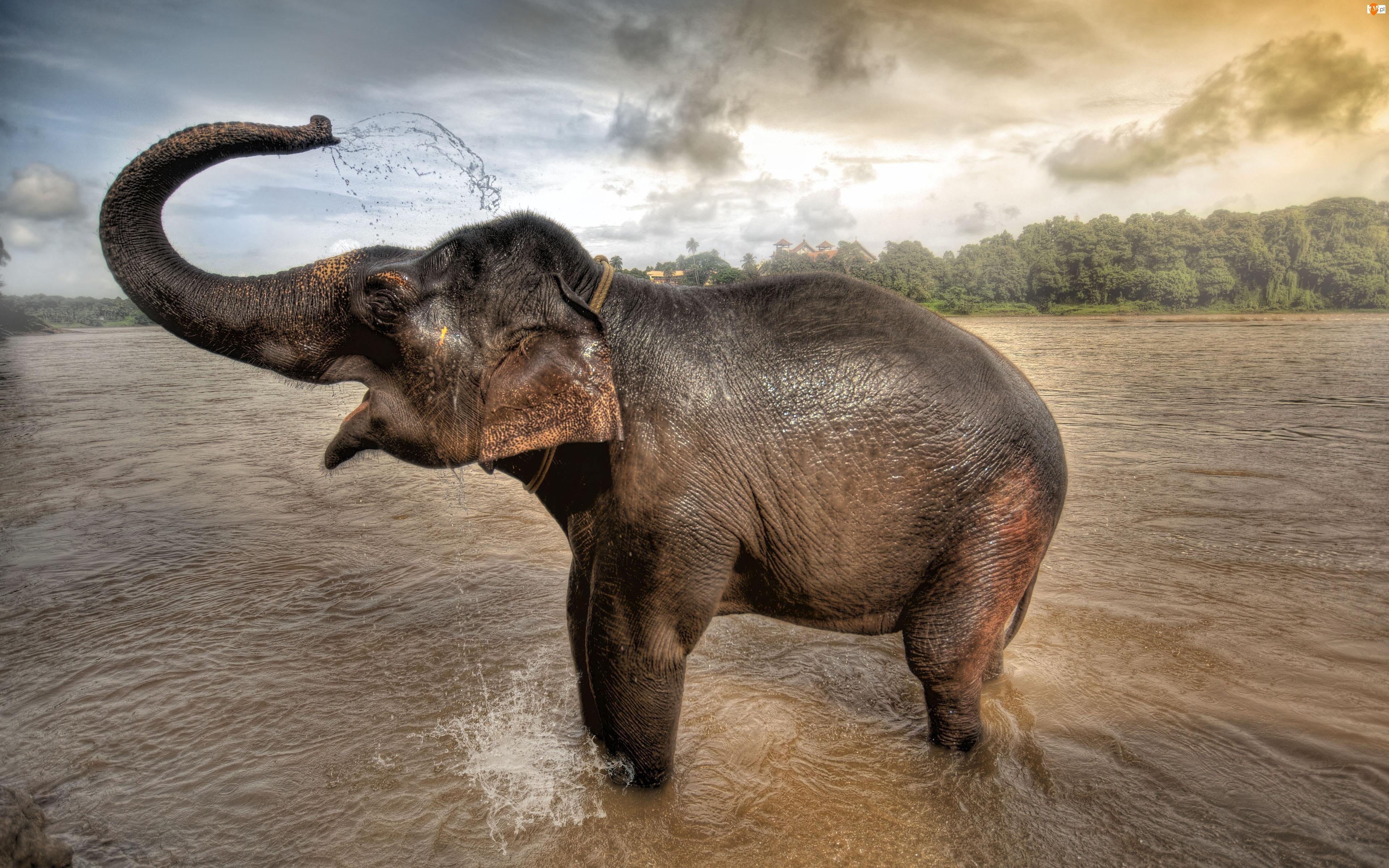 Polewanie, Słoń, Woda