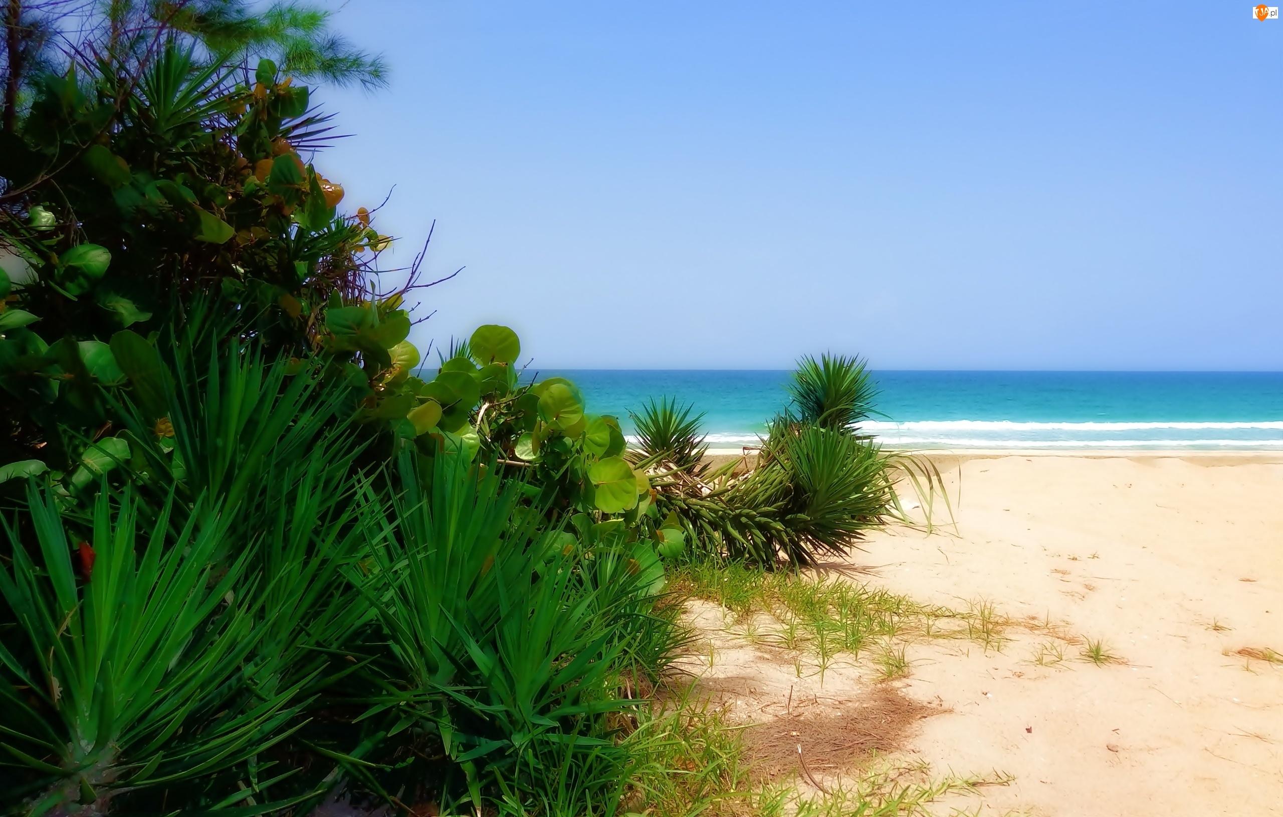 Floryda, Ocean, Plaża