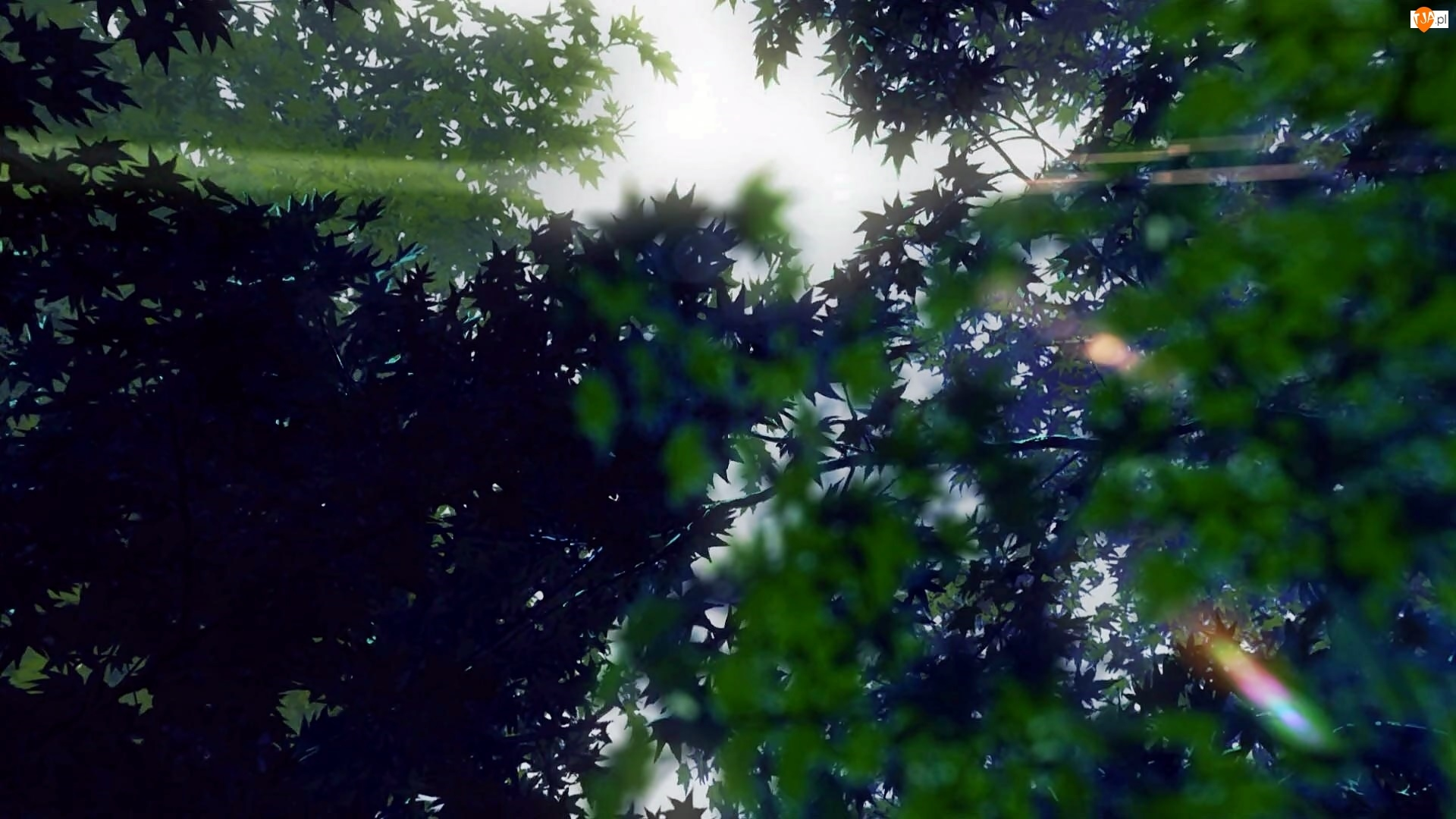 Drzewa, Rozmycie, Przebijające, Światło