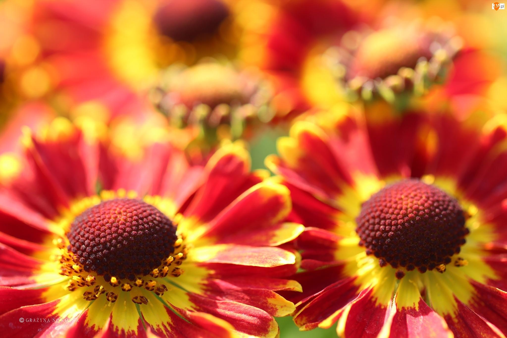 Kwiaty, Dzielżan