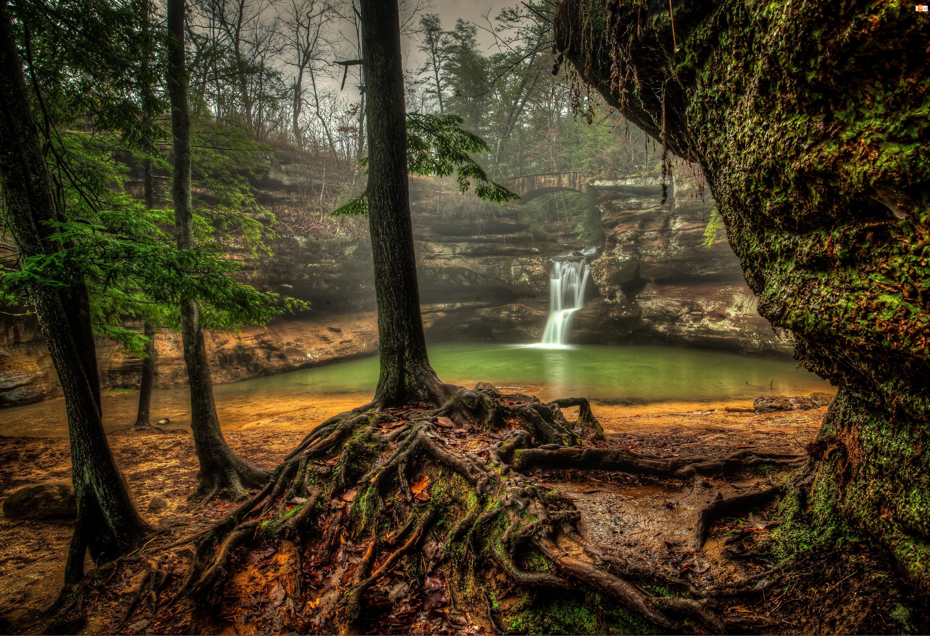 Korzenie, Las, Wodospad, Jeziorko, Drzewa