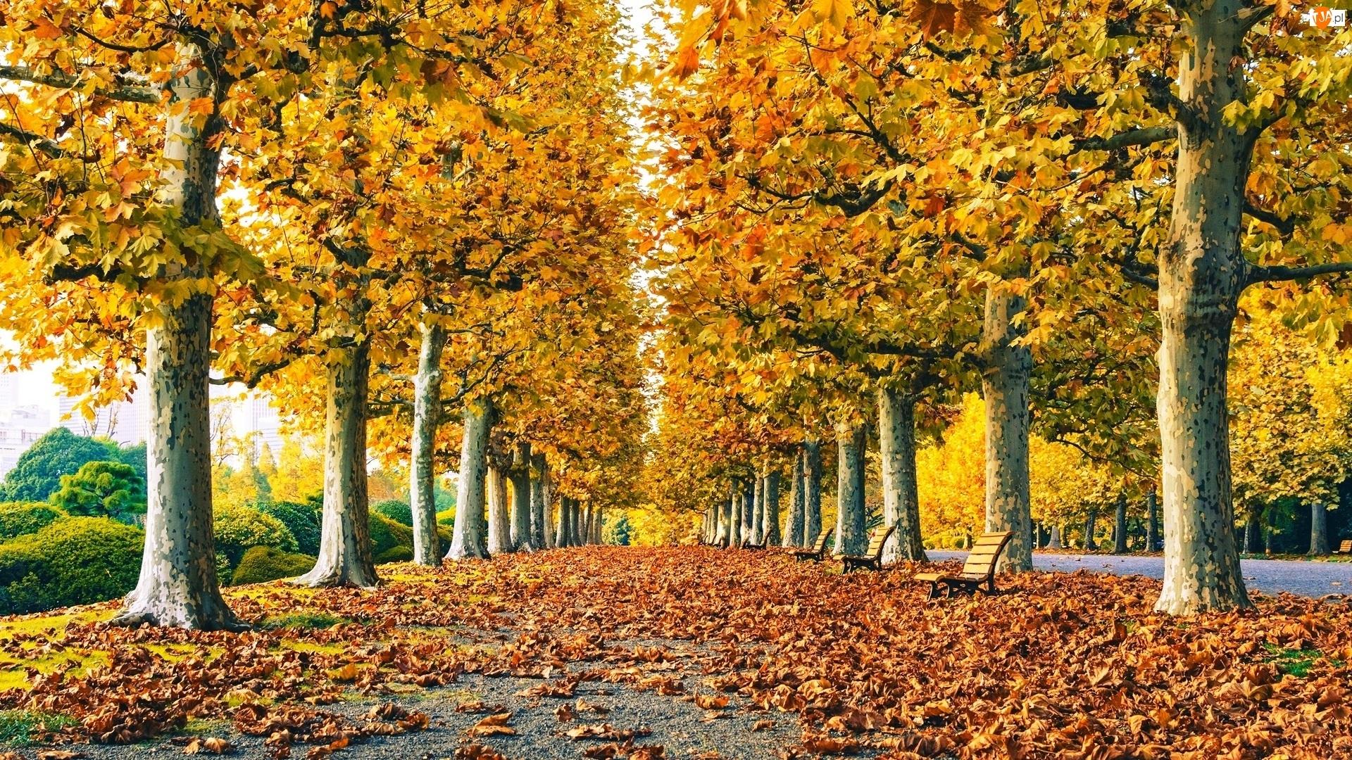 Ławeczki, Jesień, Park