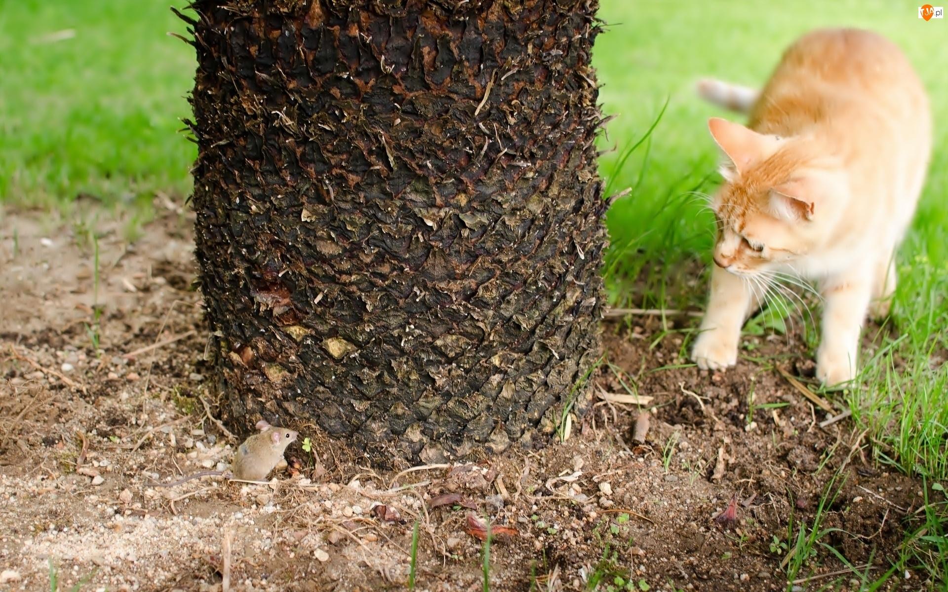 Drzewo, Kotek, Myszka