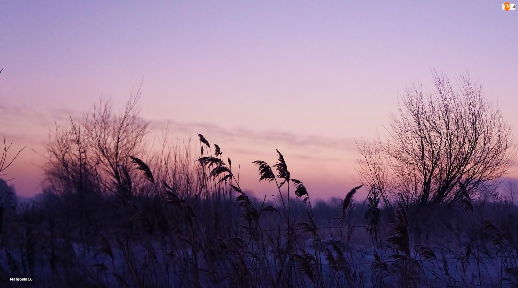 Wschód Słońca, Drzewa, Trzcina, Niebo