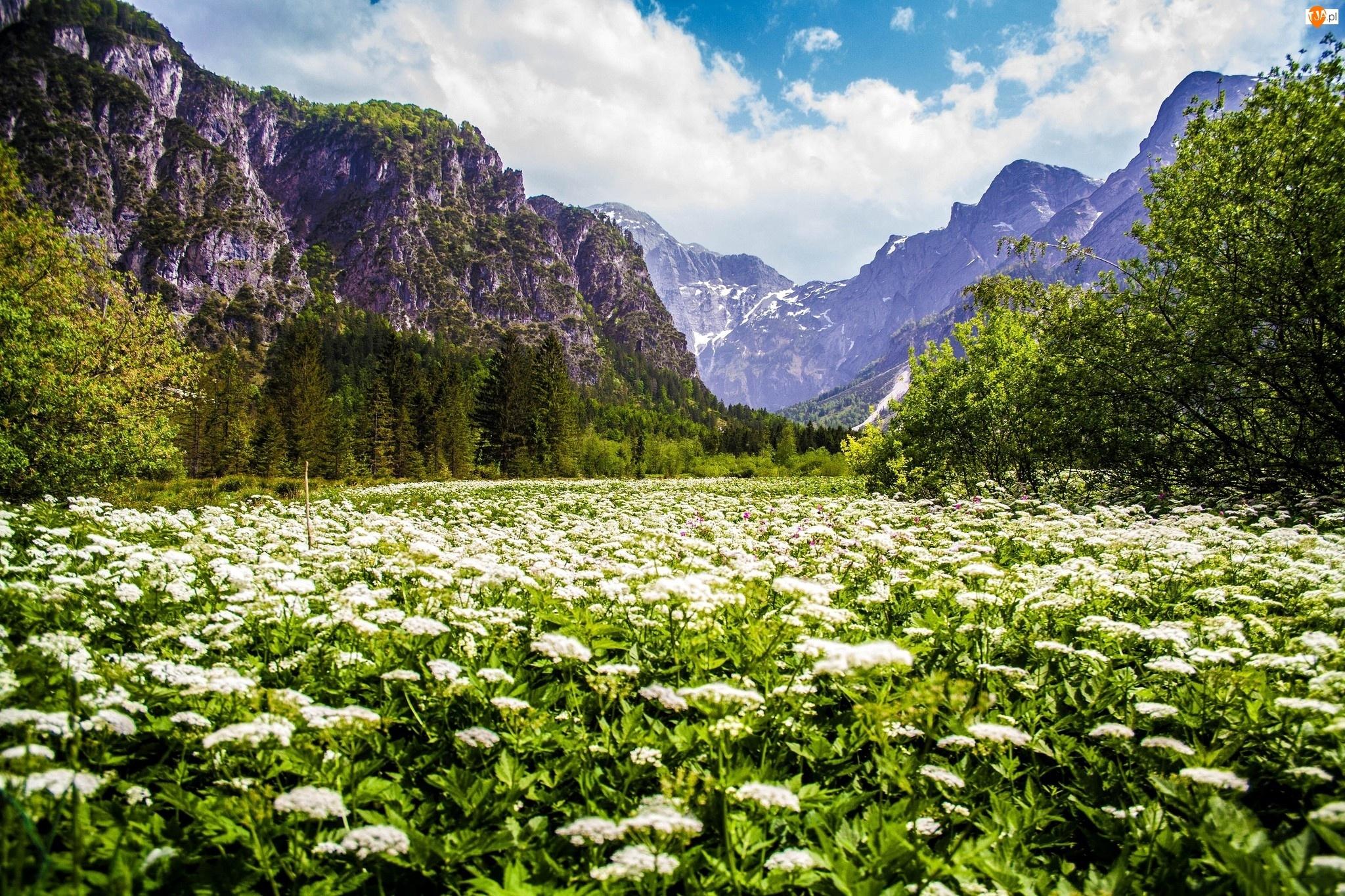 Góry, Łąka