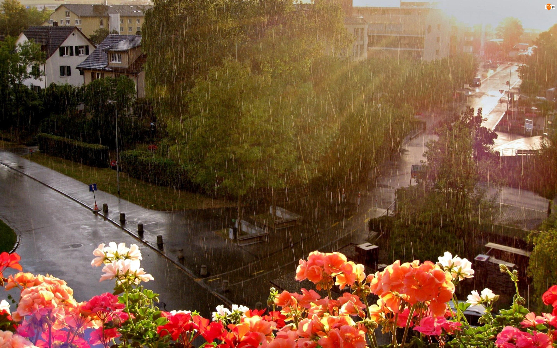 Domy, Pelargonie, Ulice, Deszcz