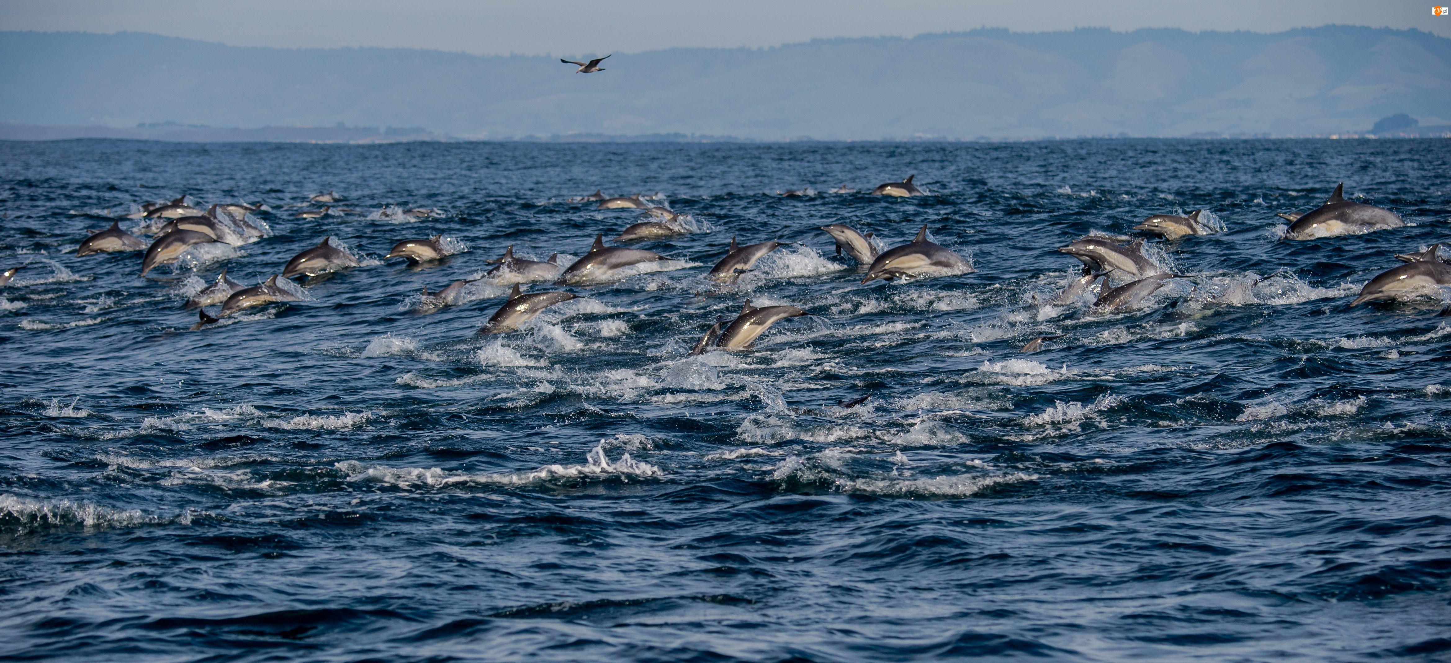 Mewa, Morze, Delfiny