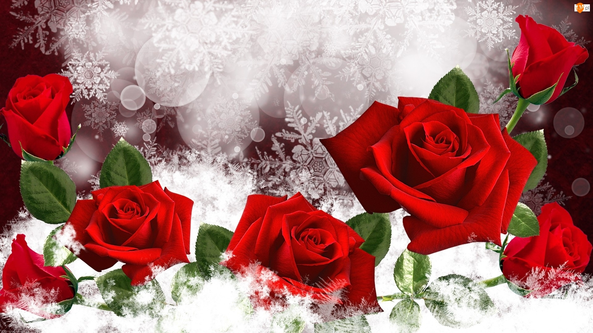 Urodzinyża, Czerwone, Art, Róże, Podziękowanie