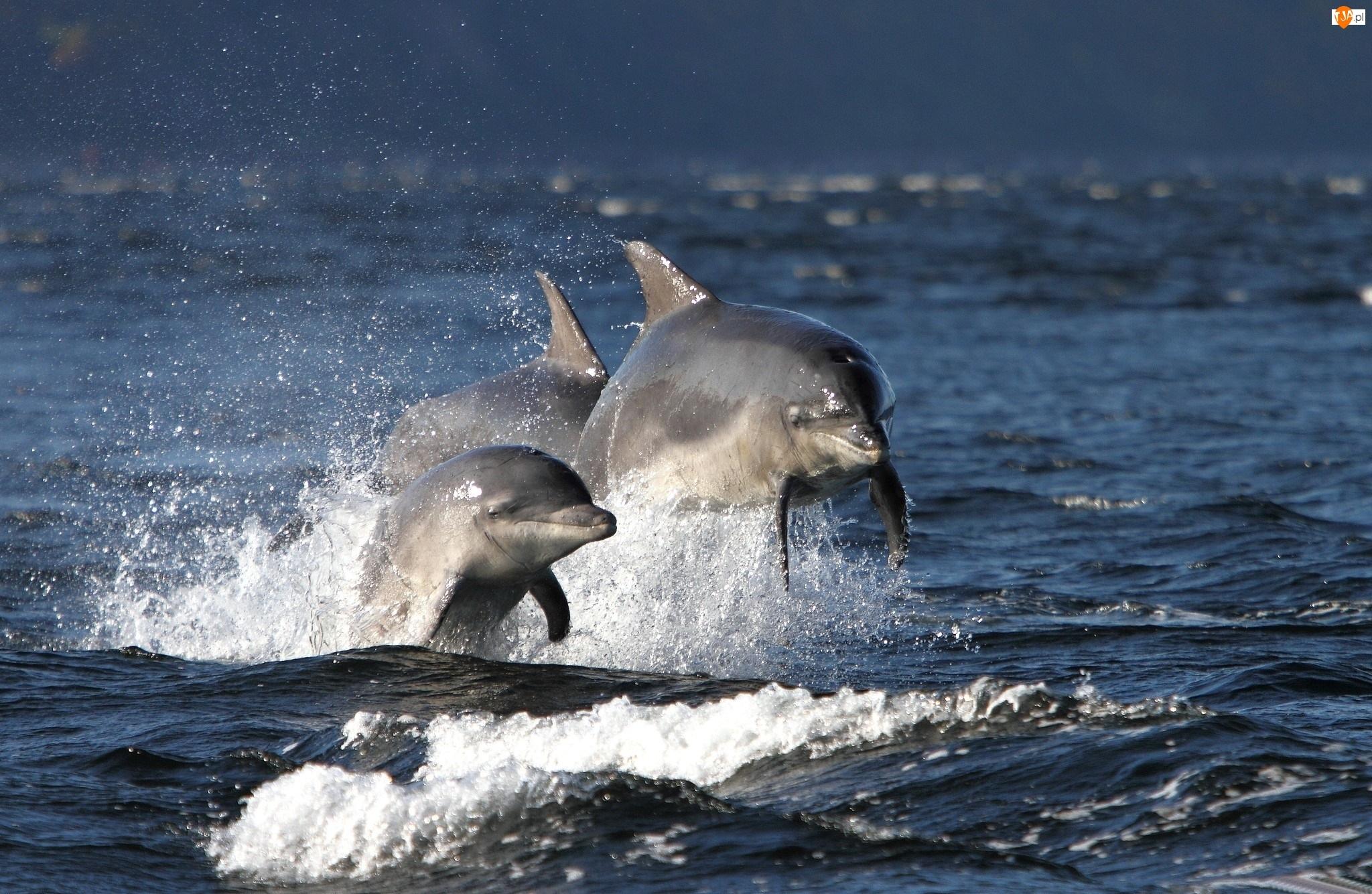 Morze, Trzy, Delfinki