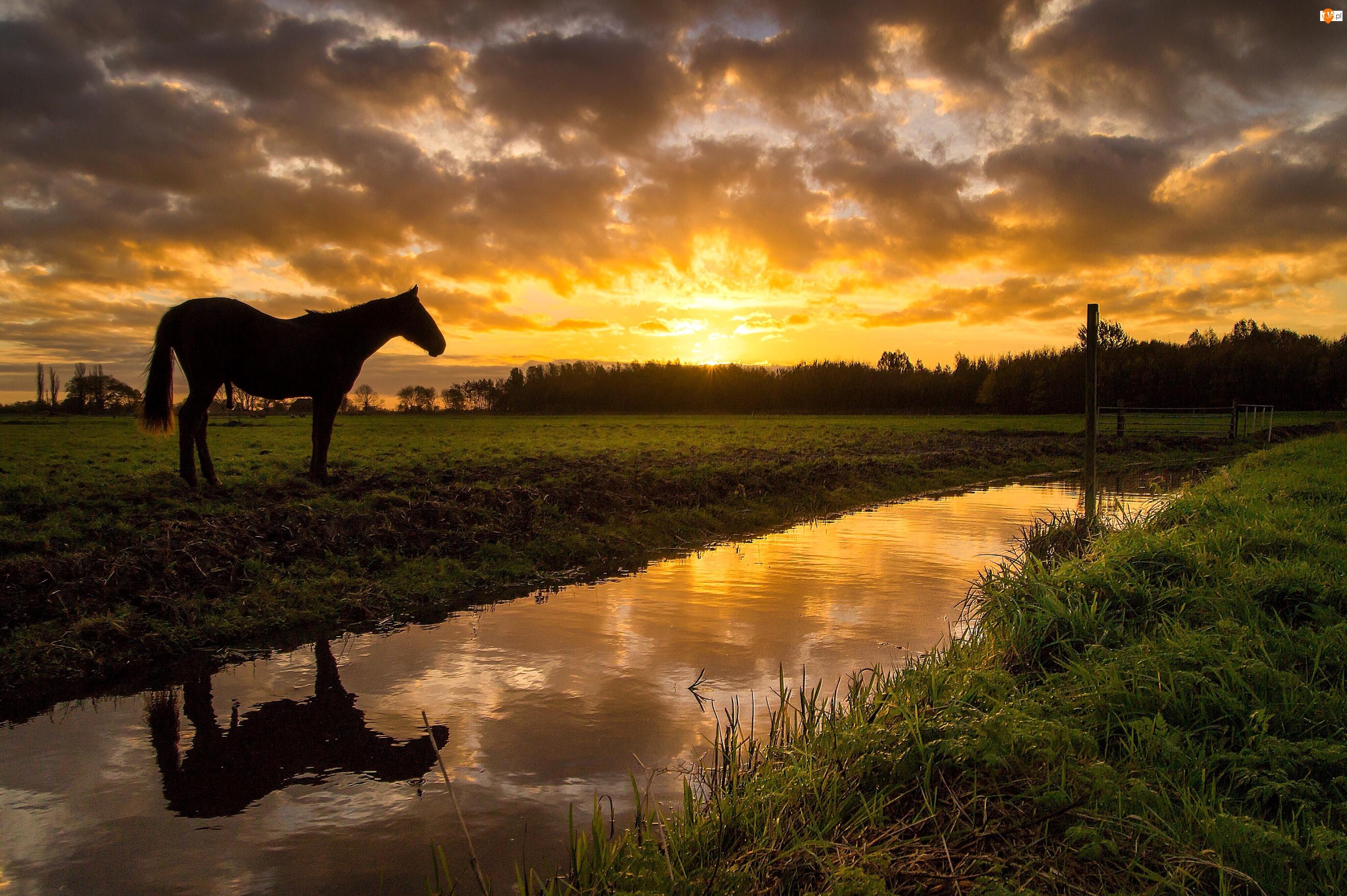 Rzeka, Koń, Zachód słońca, Łąka