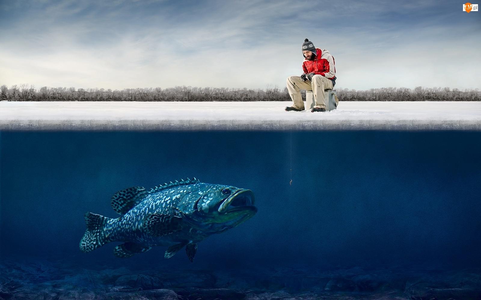 Mężczyzna, Ryba, Wędka, Duża