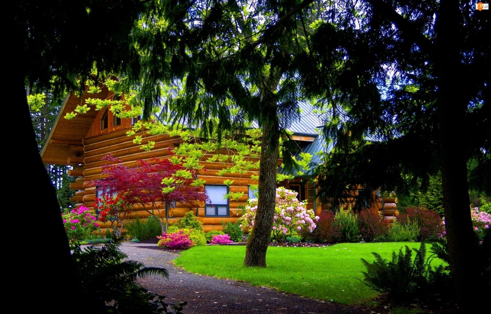 Dom, Wiosna, Drzewa, Krzewy