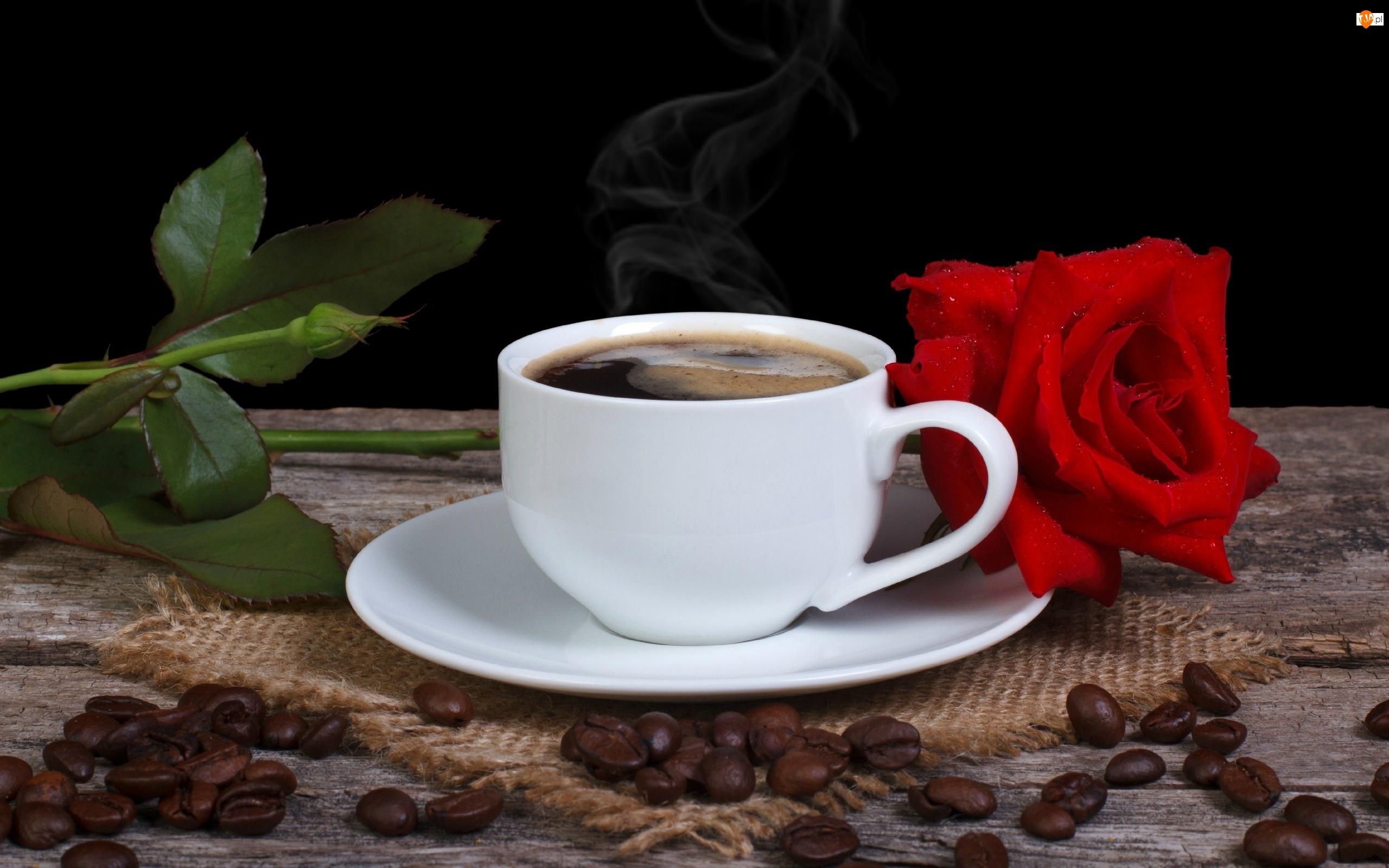 Kawy, Ławka, Róża, Kompozycja, Filiżanka, Ziarna