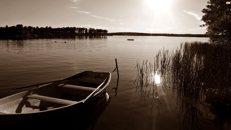 Światło, Łódka, Jezioro, Las, Sepia, Szuwary, Przebijające