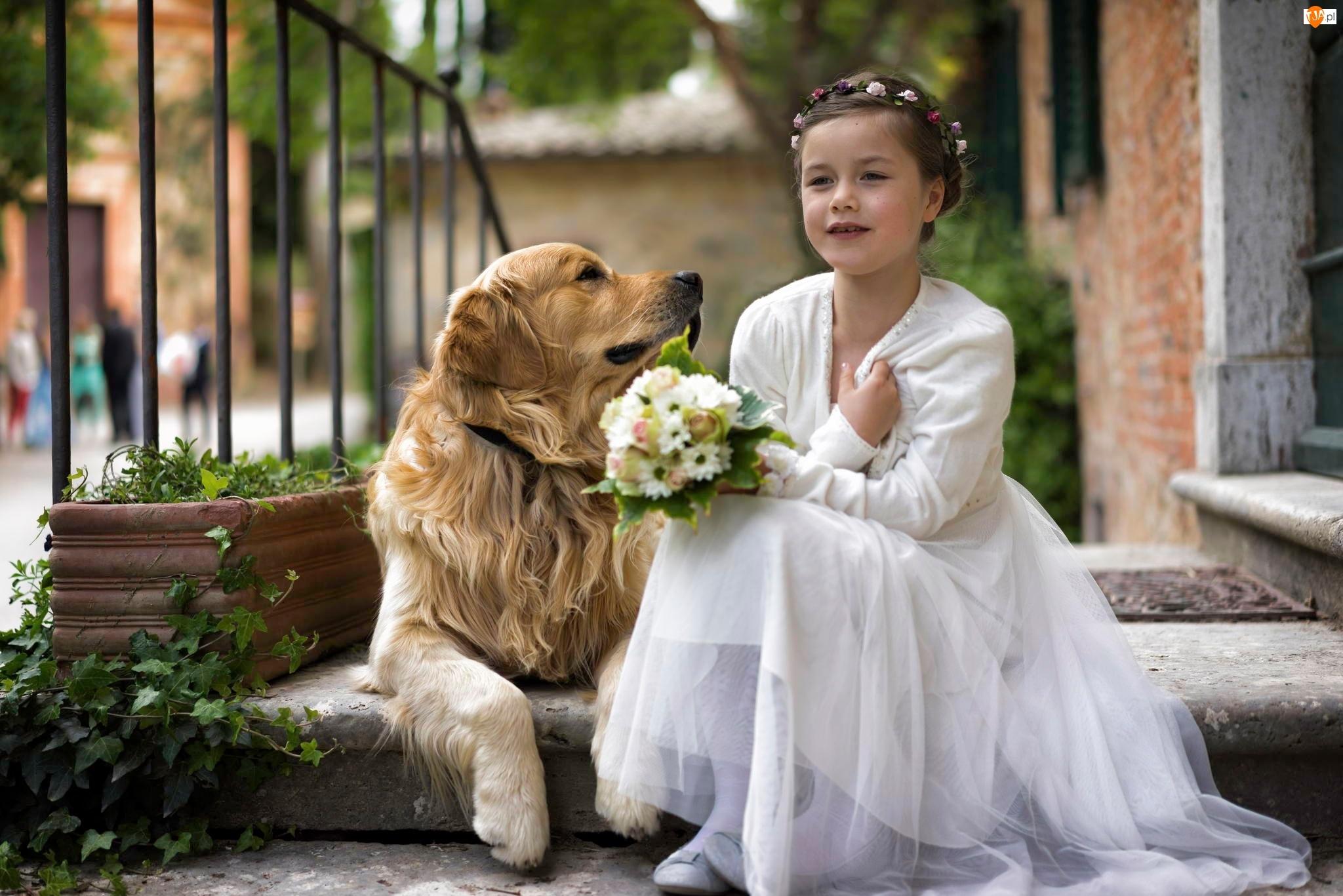 Bukiecik, Dziewczynka, Golden Retriever, Piesek, Kwiaty