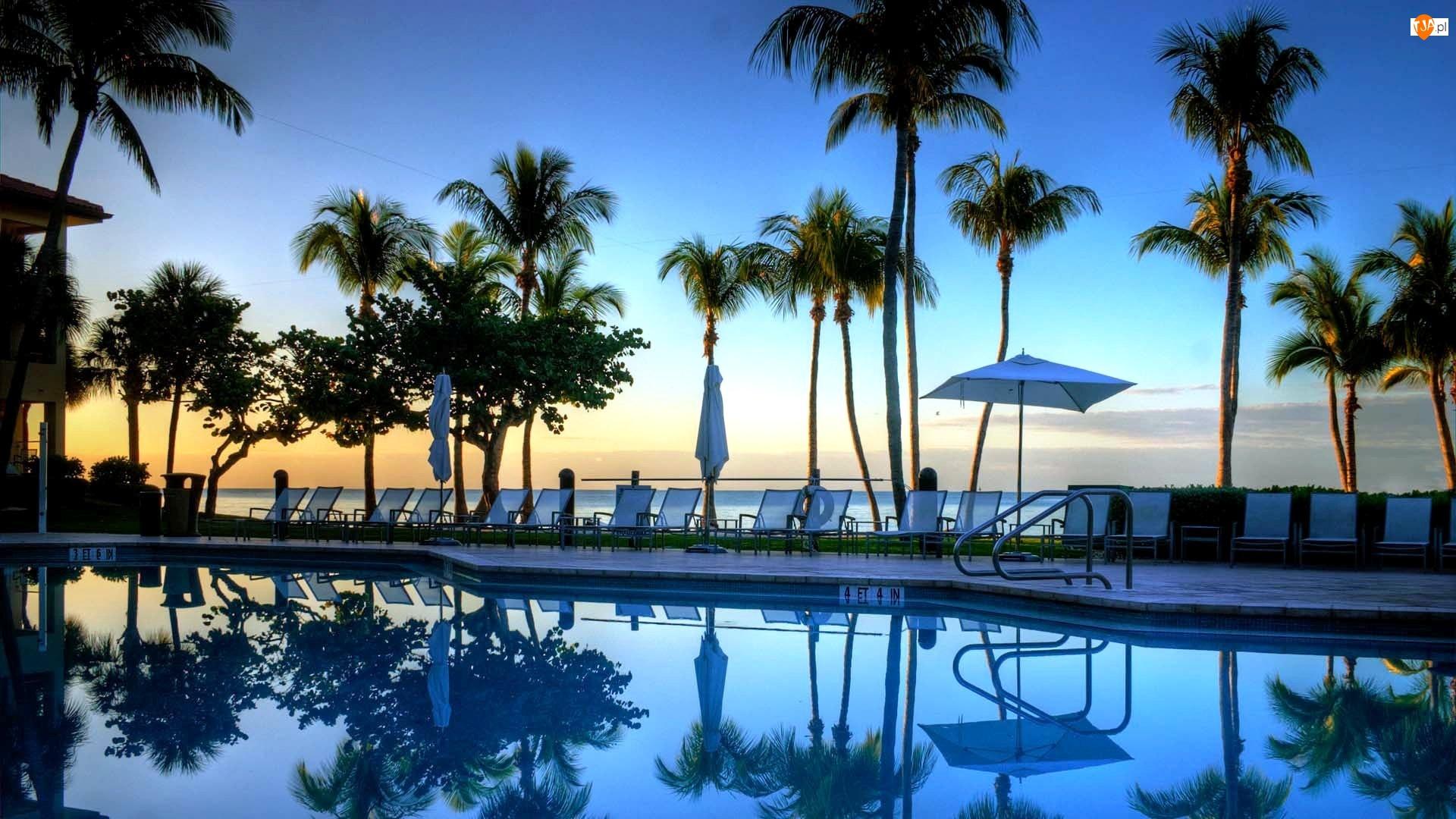 Leżaki, Morze, Hotel, Floryda, Basen, Palmy
