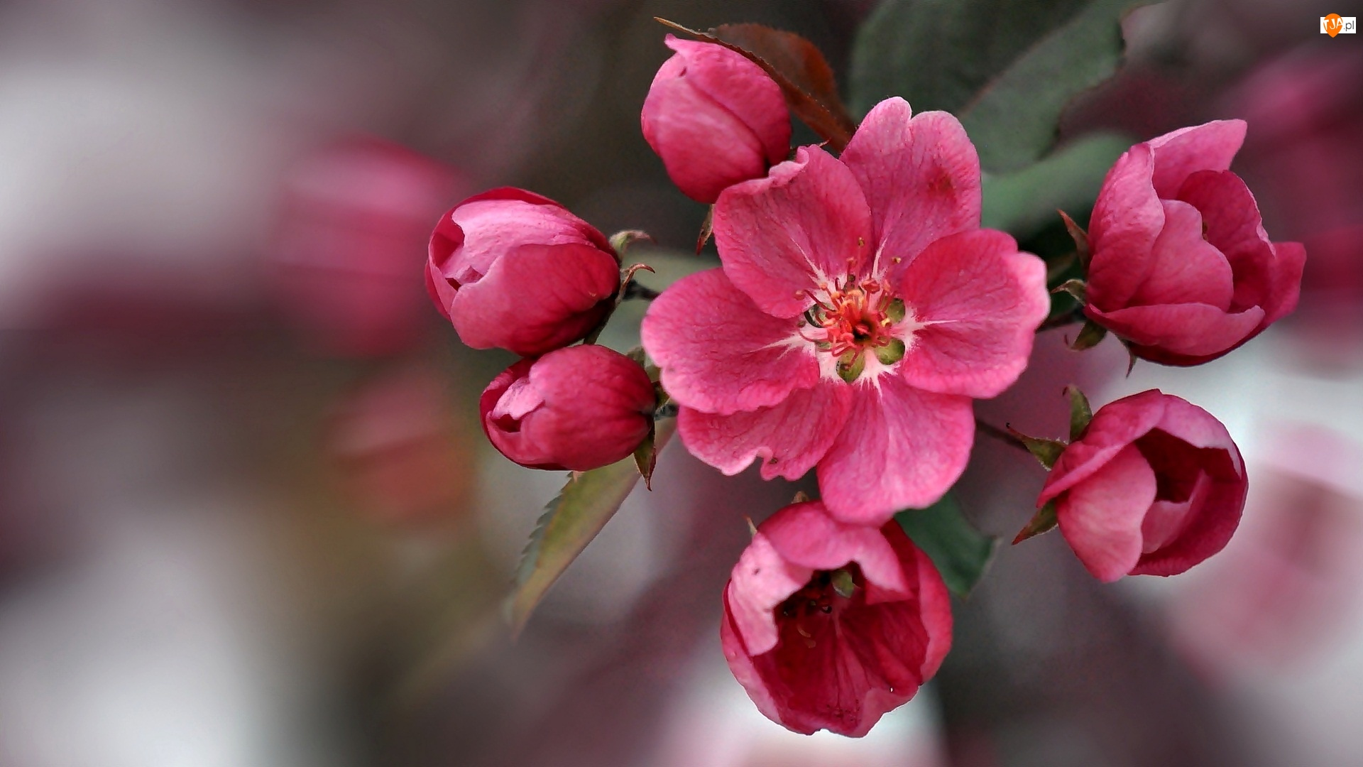 Drzewa, Gałązka, Kwitnącego