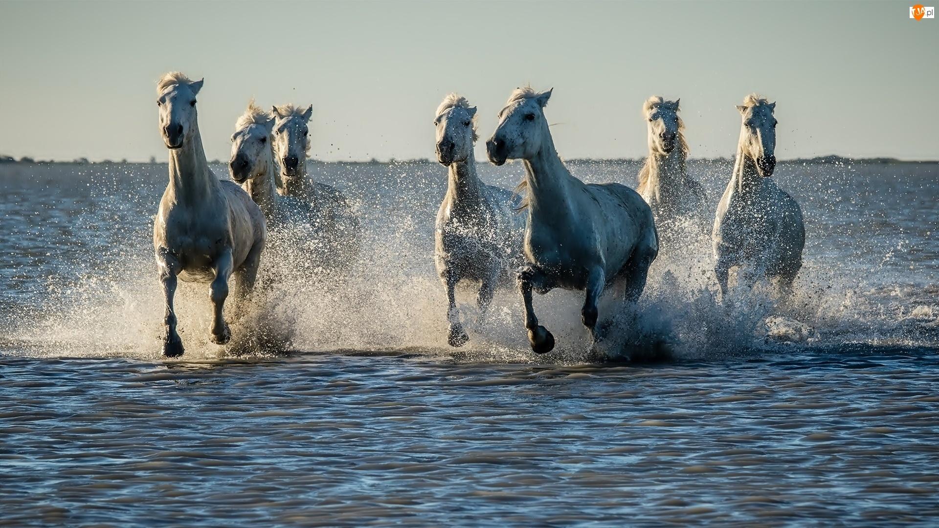 Woda, Konie, Bieg