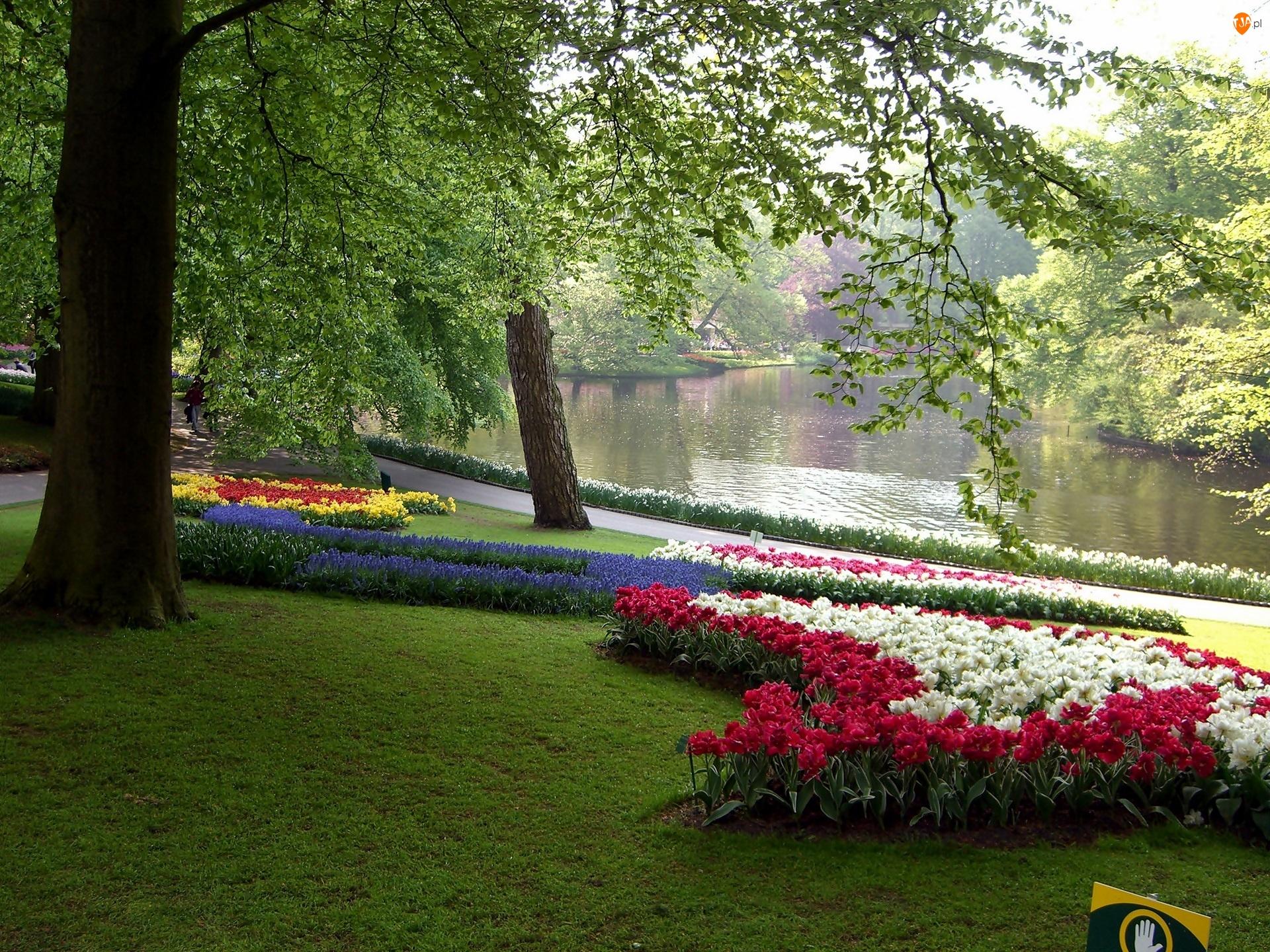 Lisse, Kwitnące, Park, Kwiaty, Kaukenhof, Wiosna