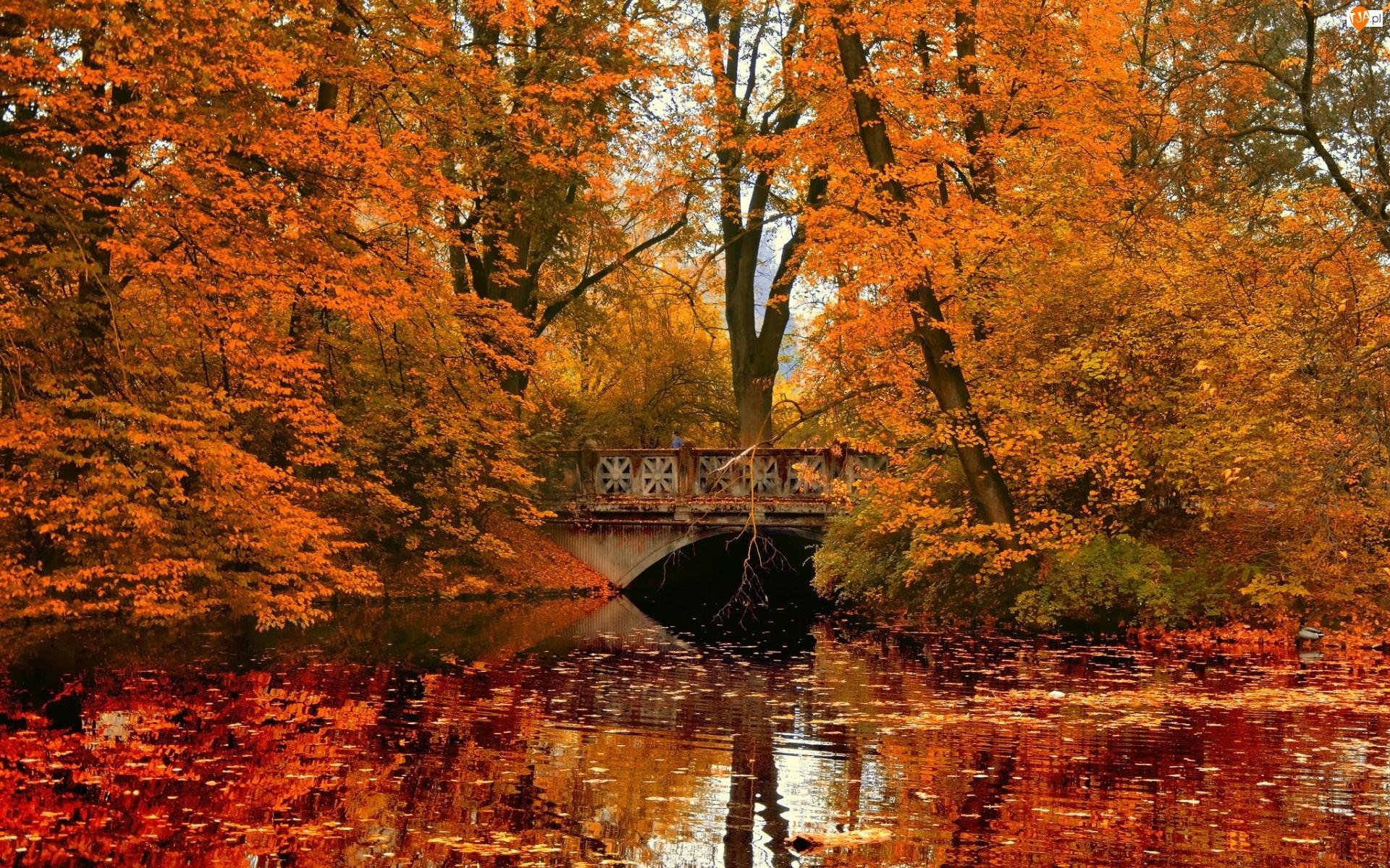 Jesień, Rzeka, Liście, Most, Park